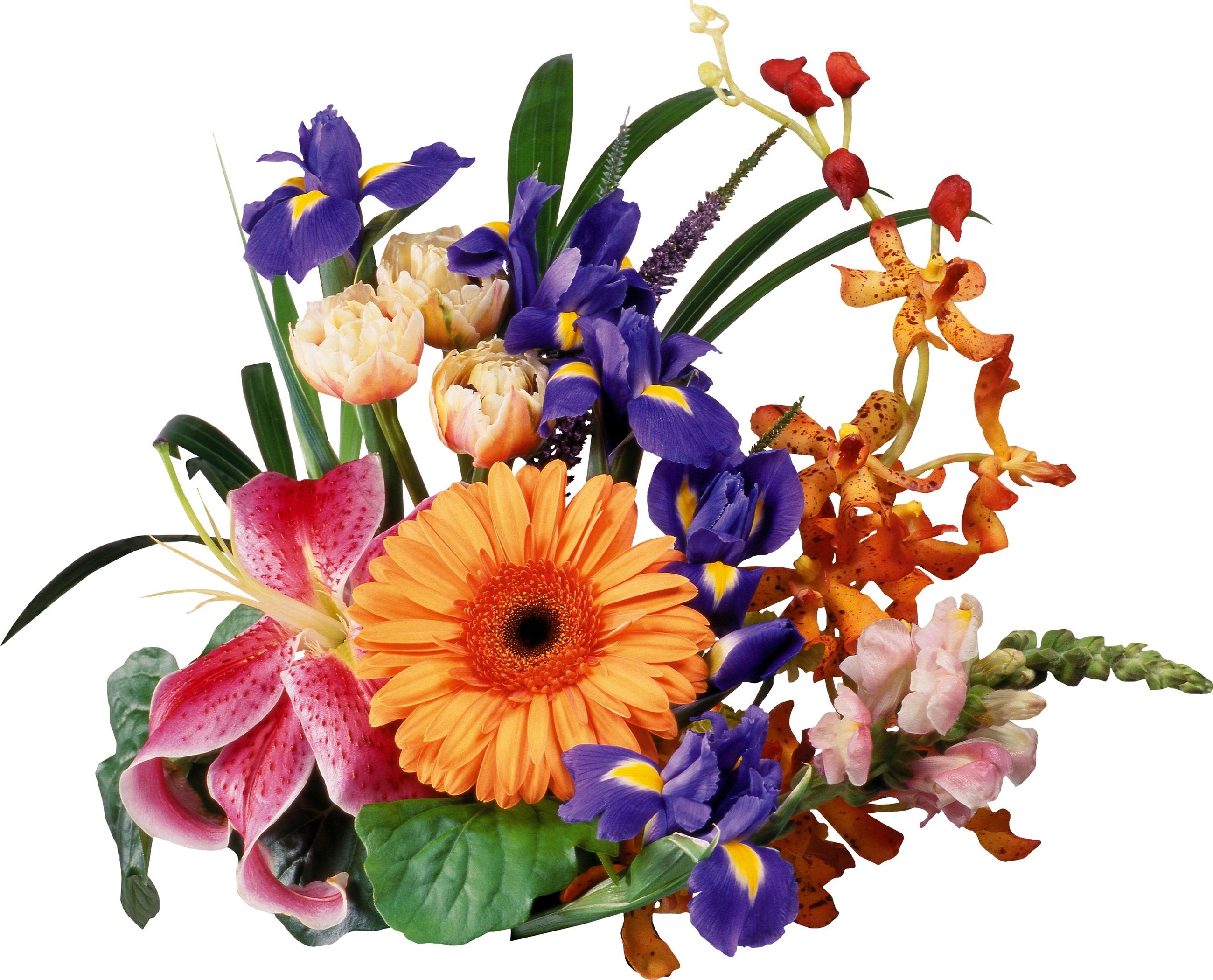 Fondos De Pantalla Hojas Iris Flor Lirio Cancion Planta De