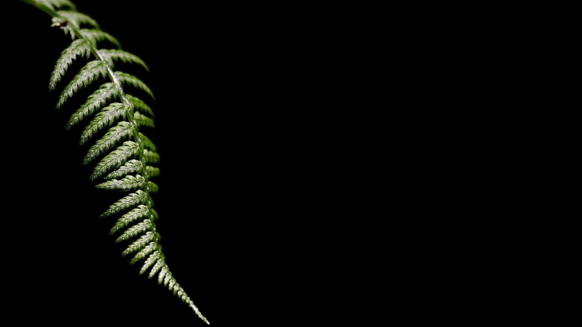 Wallpaper : leaves, black background, nature, minimalism ...