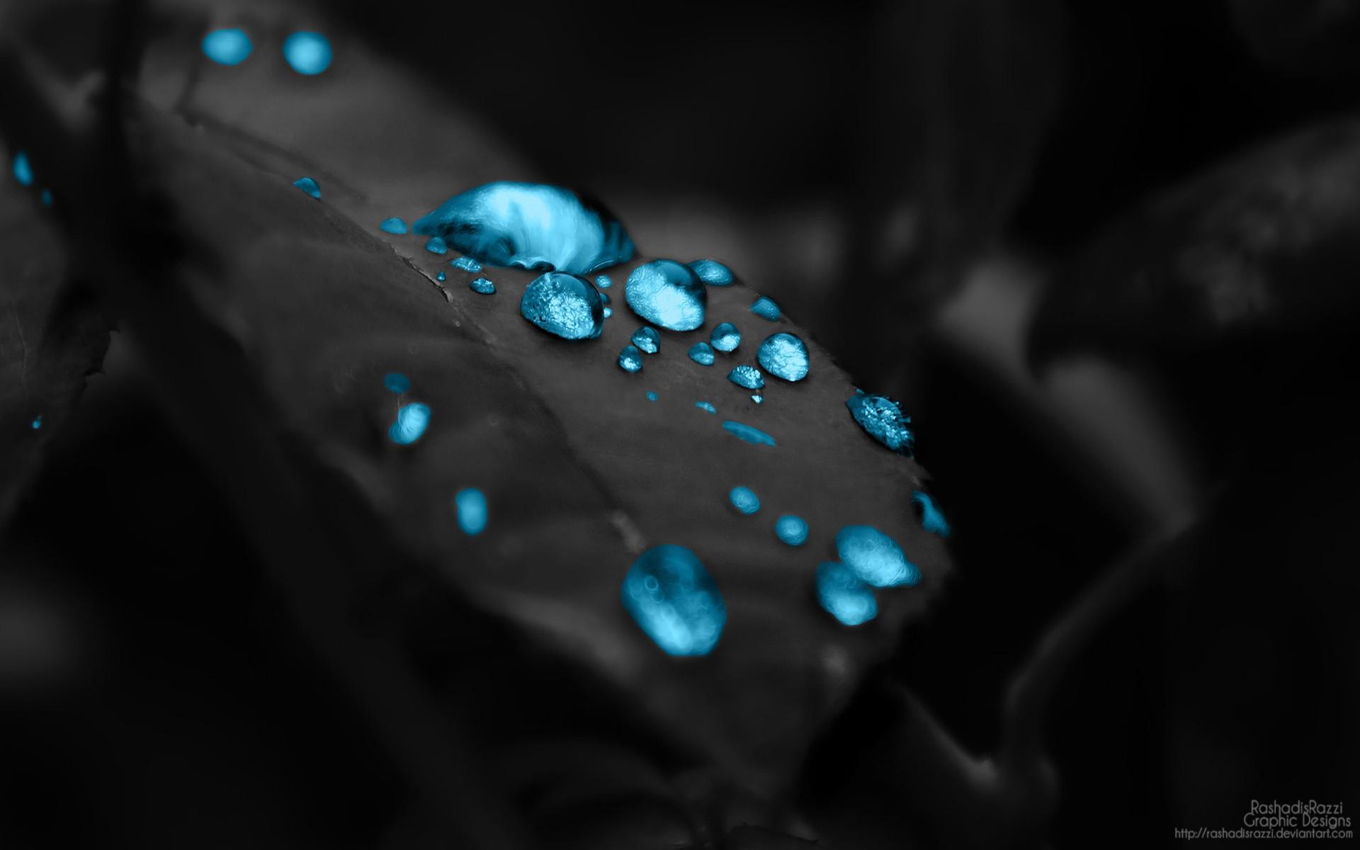 Leaves black monochrome water nature photography green blue light color flower eye drop darkness petal jewellery