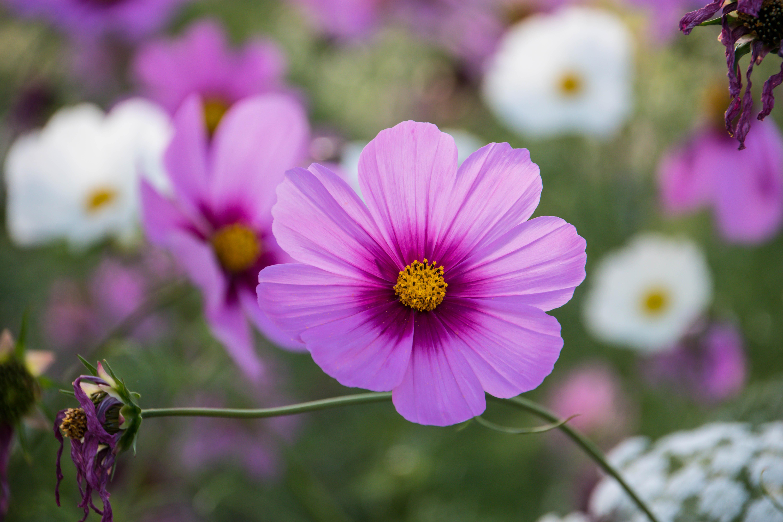 Wallpaper Leaves Flowers City Nature Blossom Sweden Pink