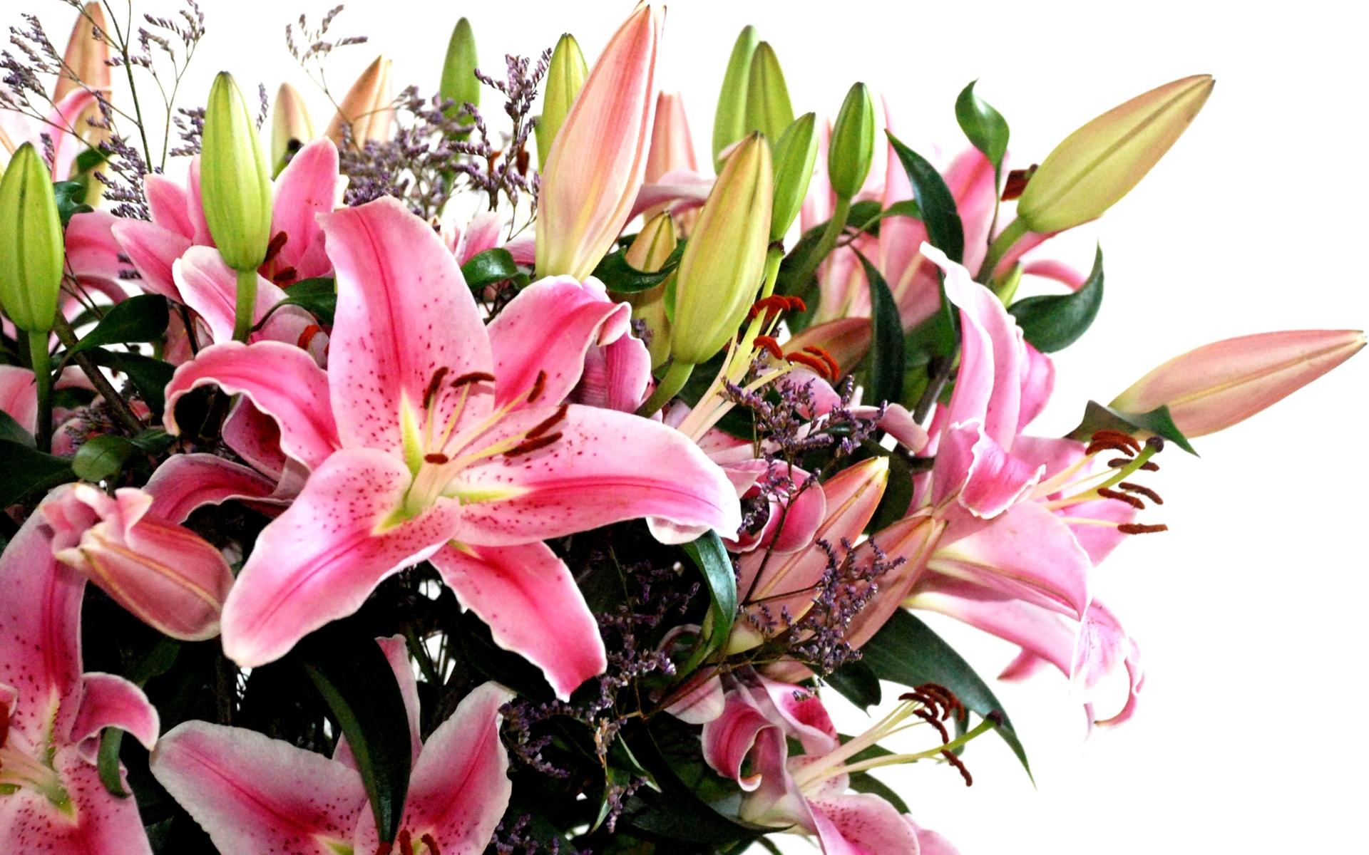 fond d 39 cran feuilles pollen fleur rose fleurs de lys lis flore bourgeons plante. Black Bedroom Furniture Sets. Home Design Ideas