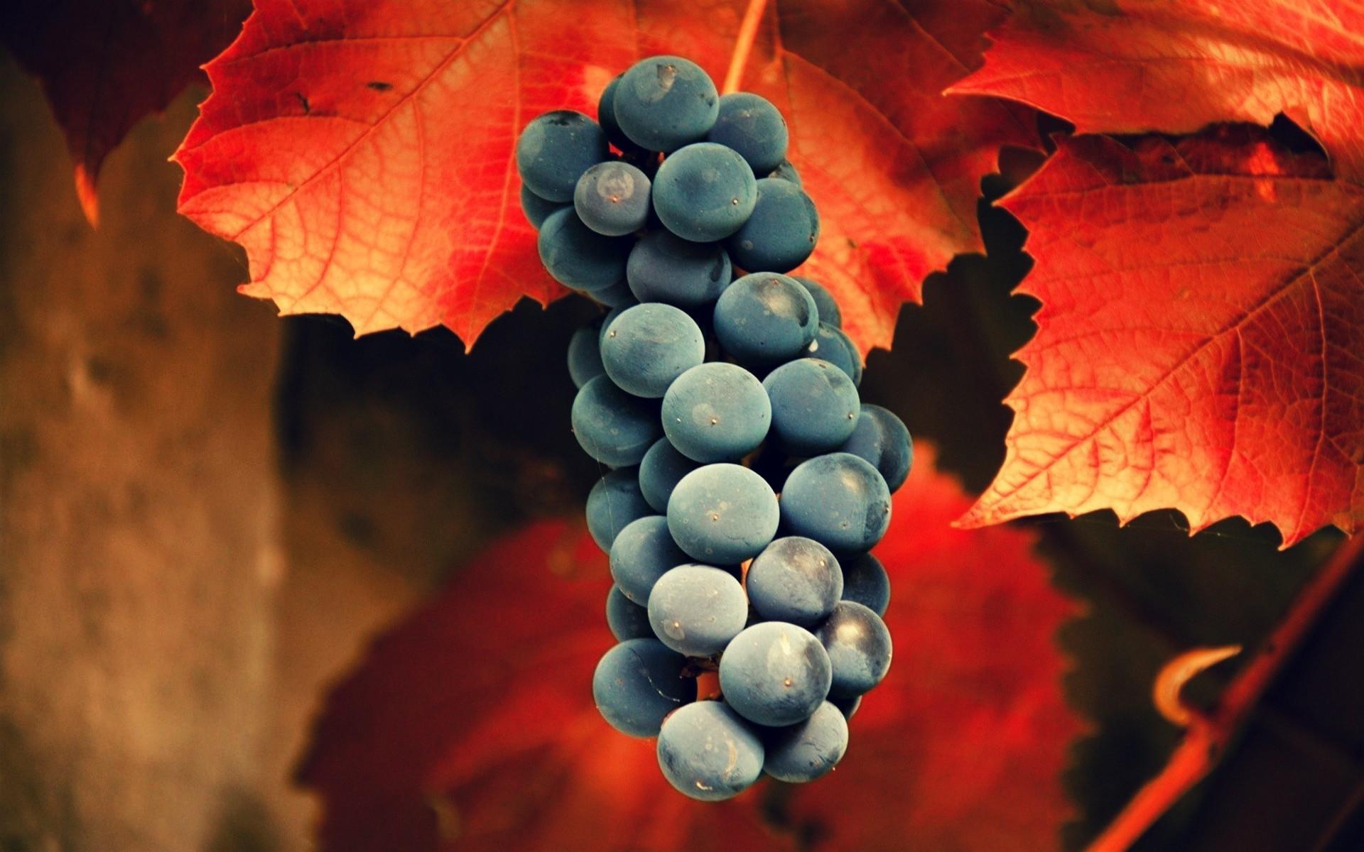 Hintergrundbilder : Blätter, Lebensmittel, rot, Frucht, Traube ...