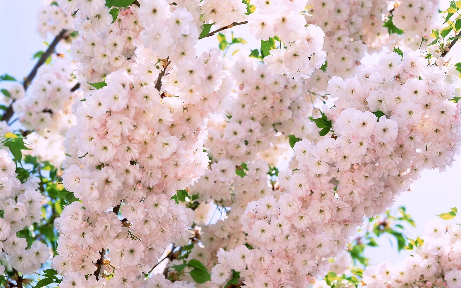 это слово, фото для обоев на рабочий стол весна способны свободно проникнуть