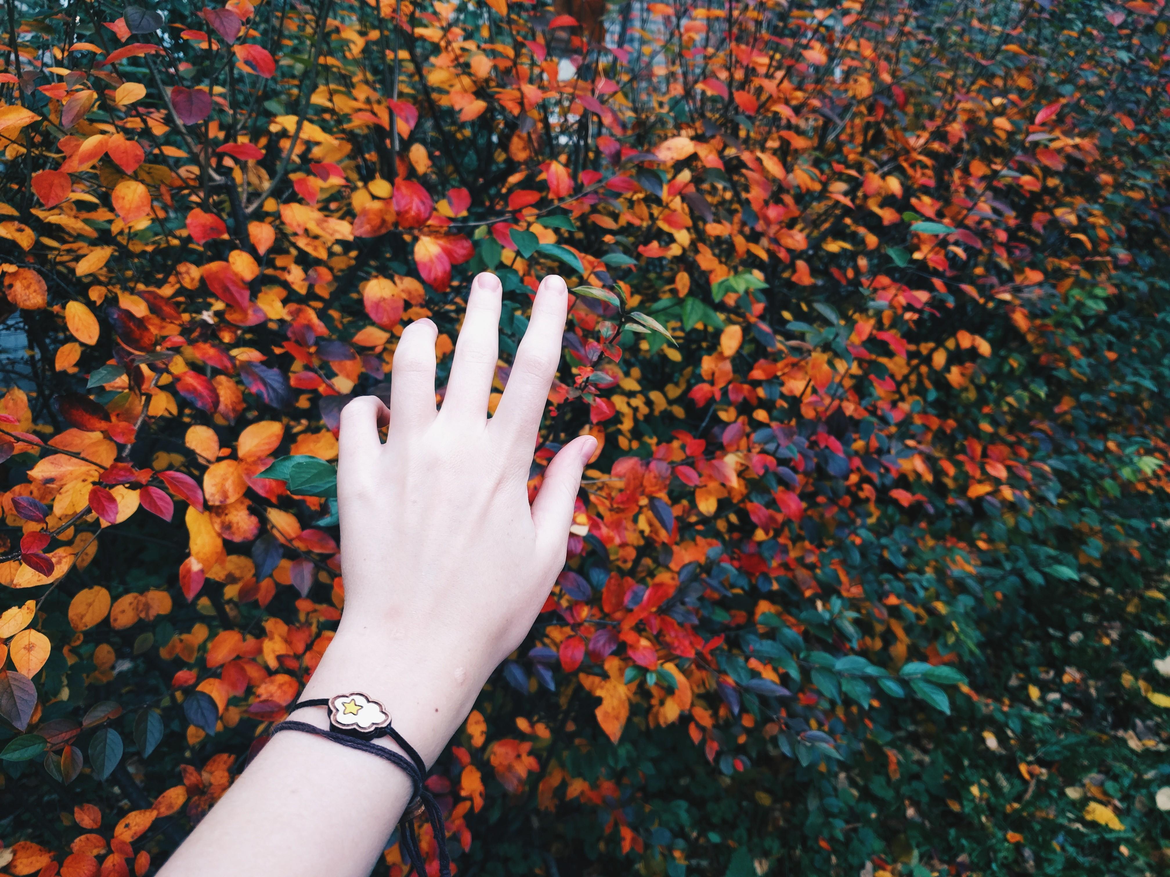 Fondos de pantalla : hojas, manos, rojo, patrón, primavera, ART ...