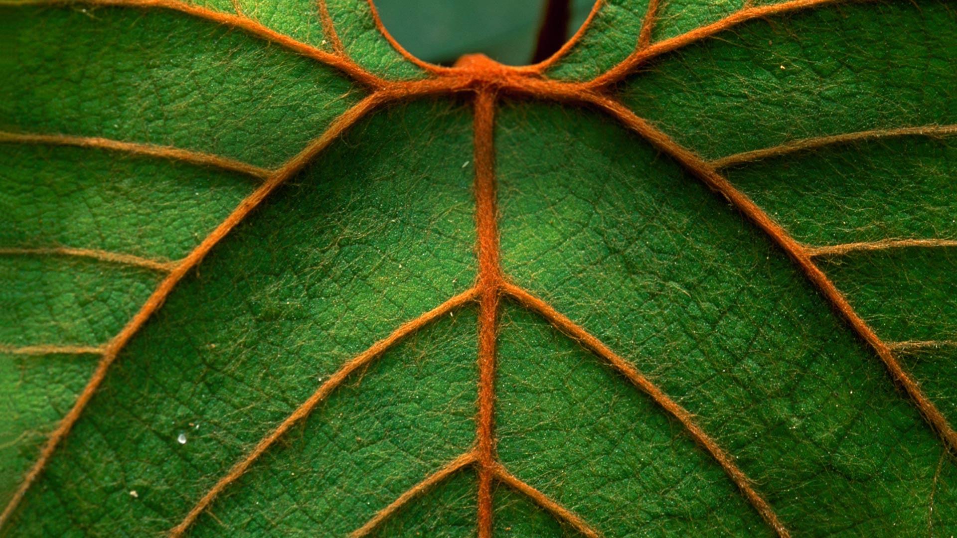 как показывает макро фото сечение листа дерева проектирования пространств вторым