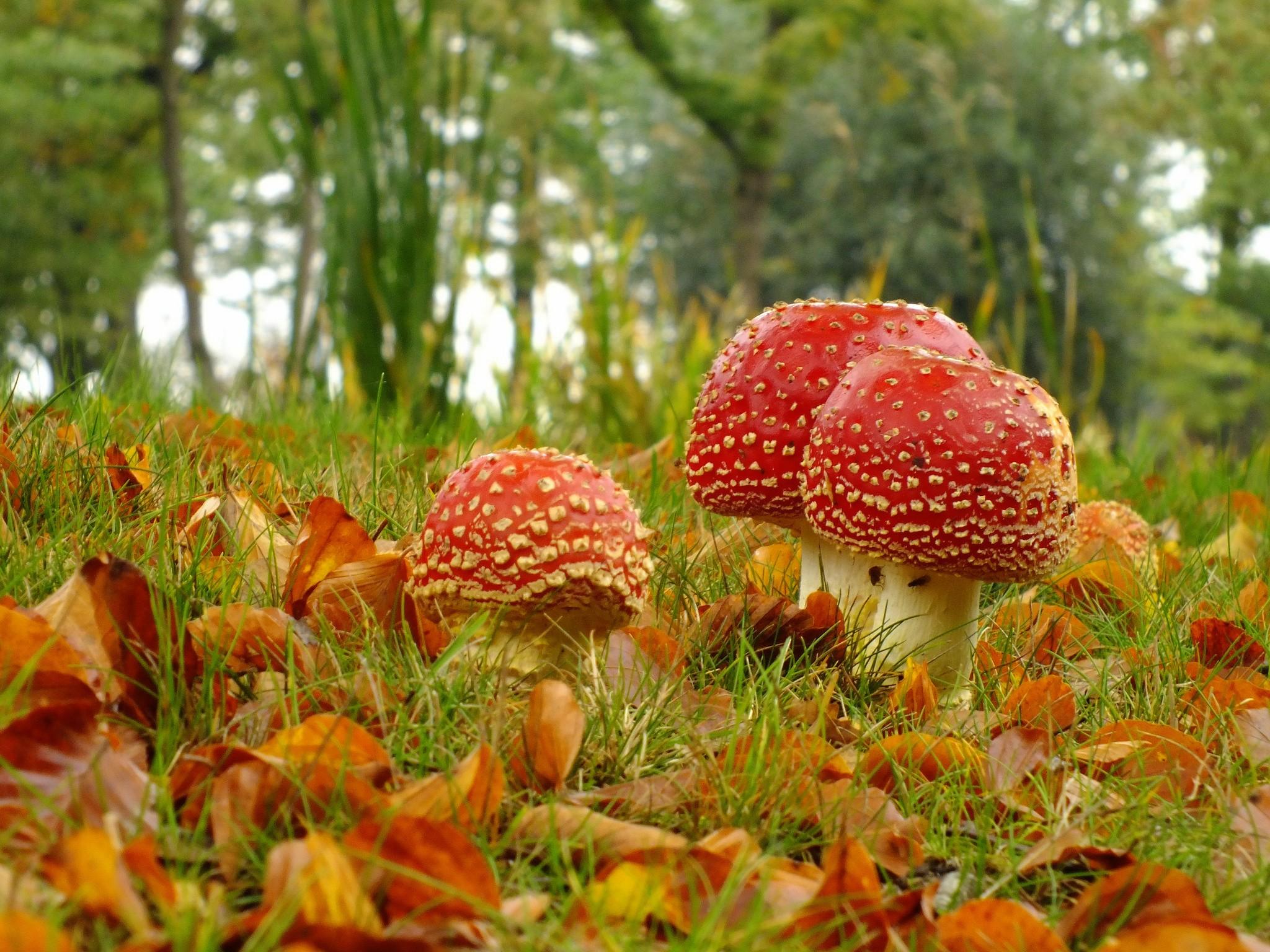 Картинки о природе растениях и грибах