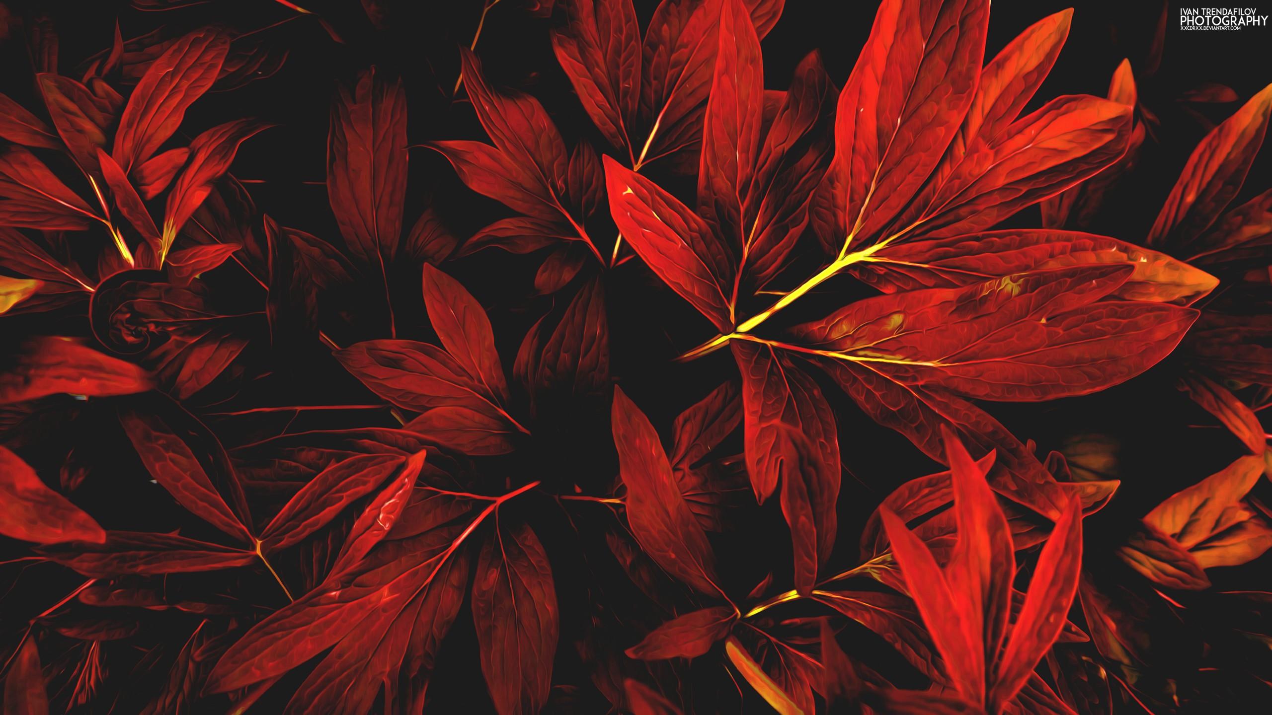 leaves nature red fall Ivan Trendafilov 1141101