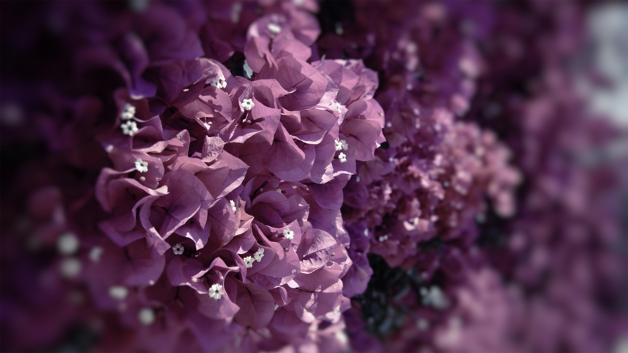 fond d'écran : feuilles, fleurs roses, la nature, les plantes, la