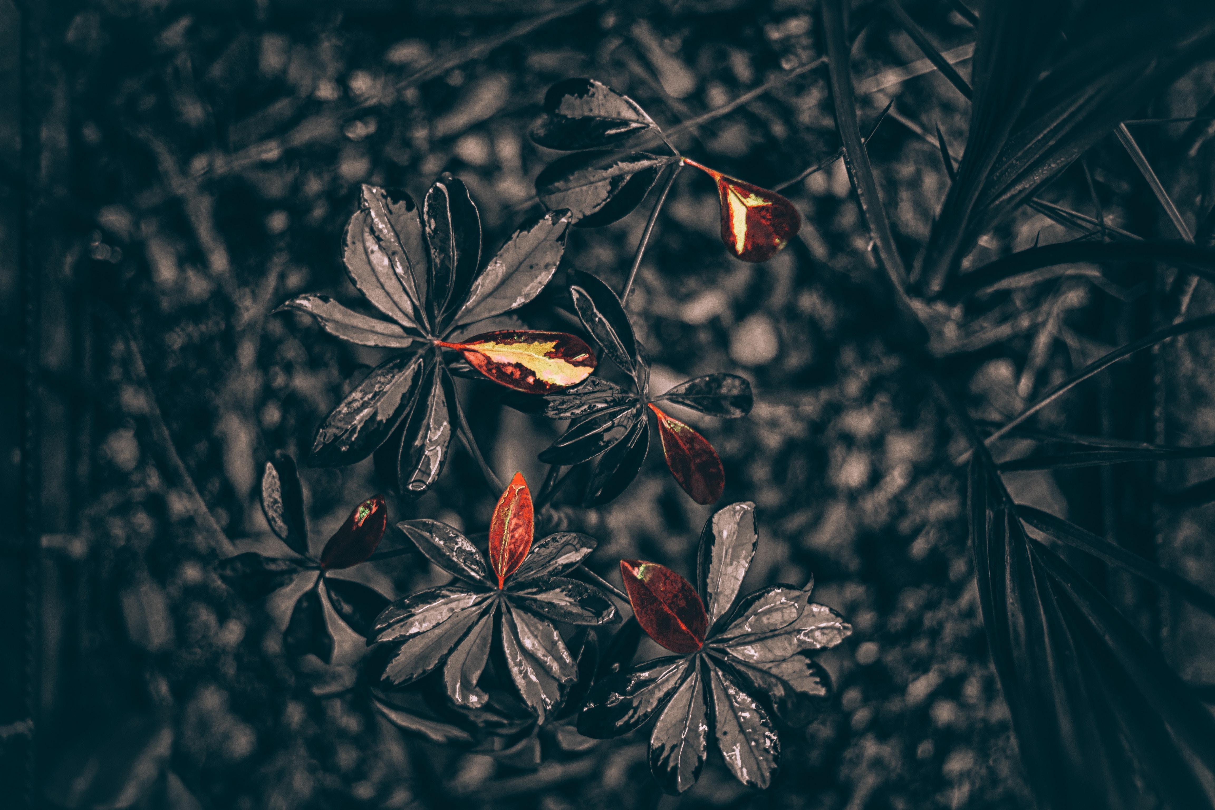 leaves plant drops black 1230542