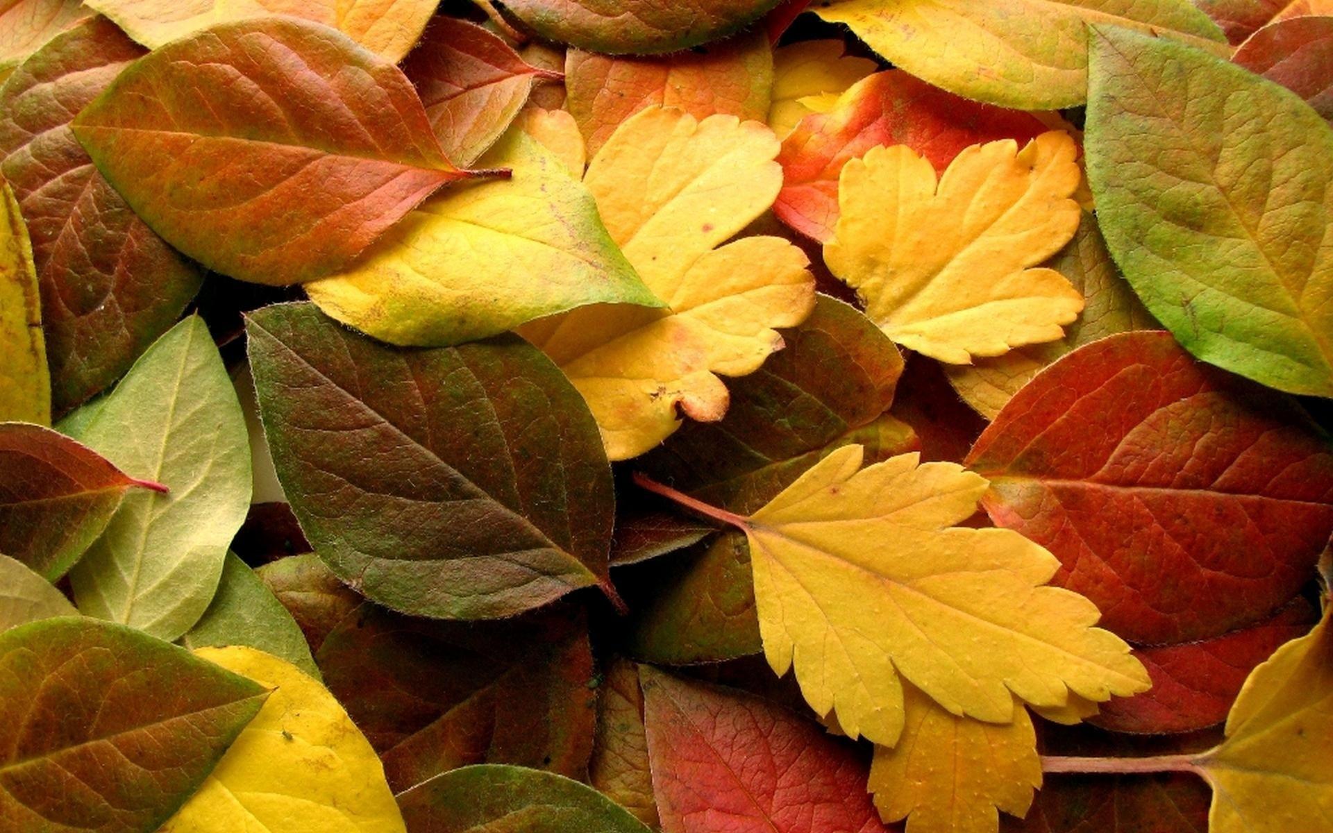 мифах красивые картинки разных листьев которые раскладываются