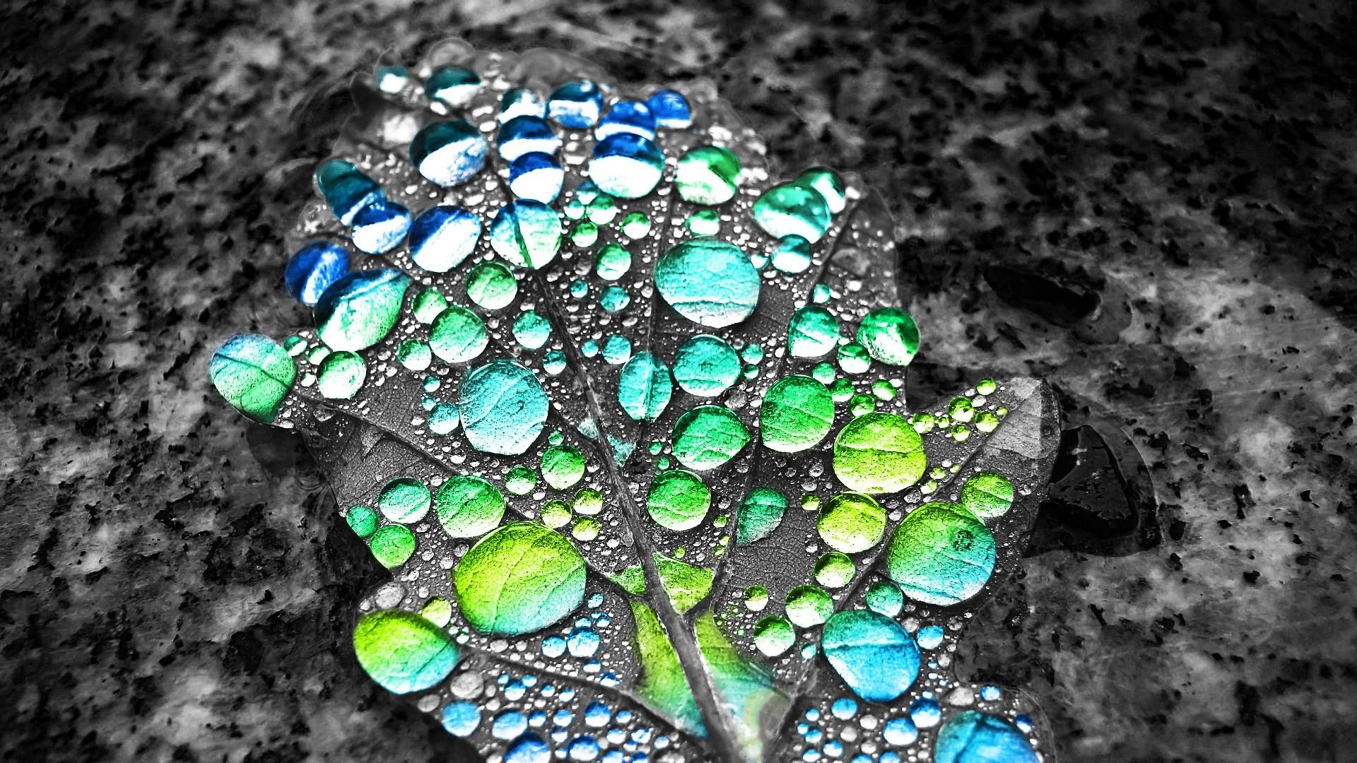 Hintergrundbilder : Blätter, Selektive Färbung, Wassertropfen, Grün ...