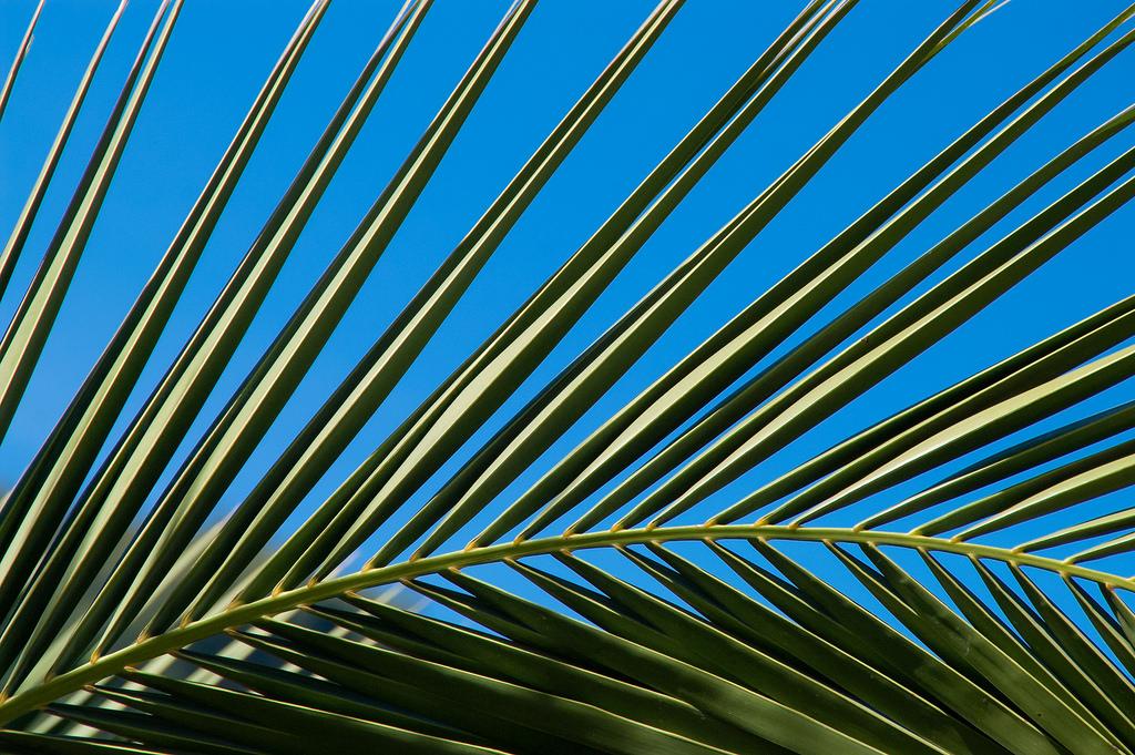 Fond d'écran : feuilles, ciel, symétrie, modèle, Portugal, arbre, feuille, paume, ligne, Papier ...