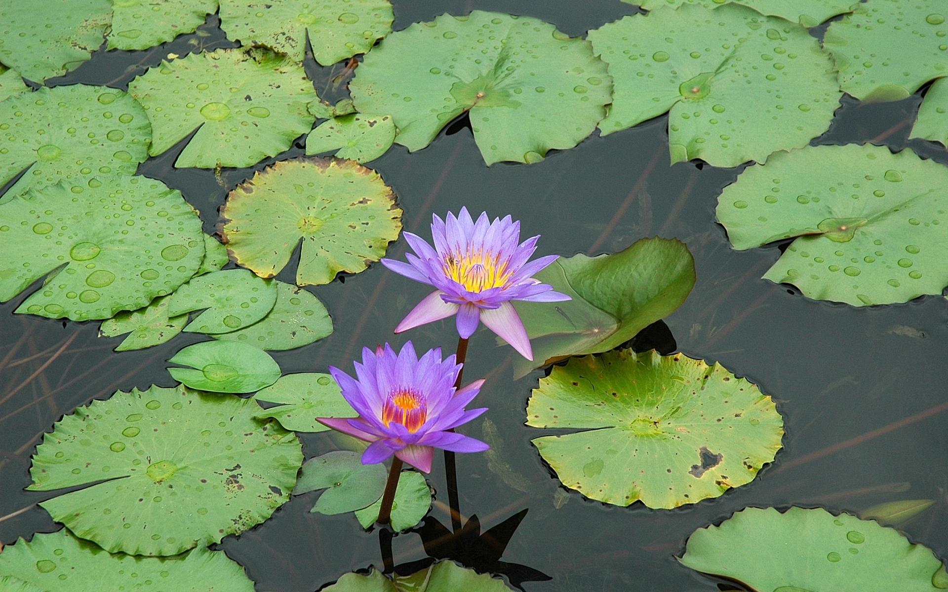 Fondos de pantalla hojas agua verde estanque pantano for Agua verde estanque