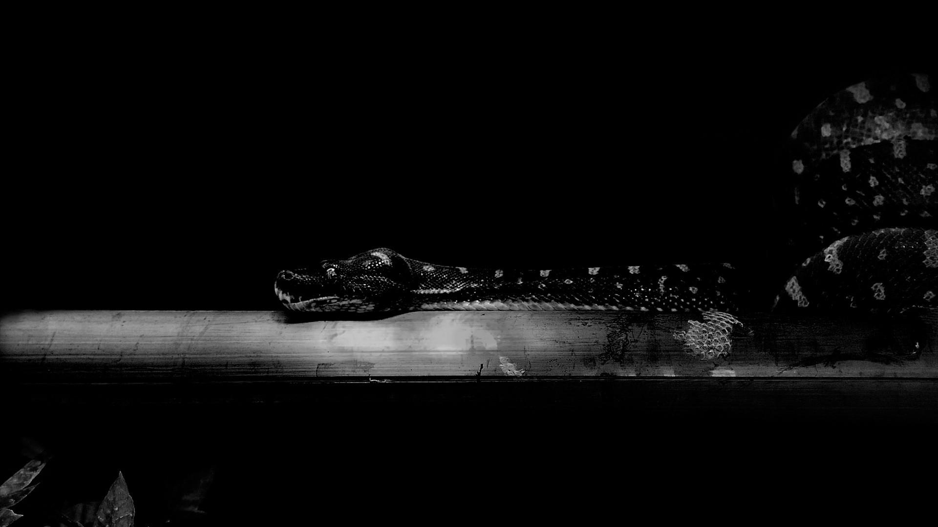 Leaves white black animals monochrome black background dark night nature photography wood snake light lighting darkness