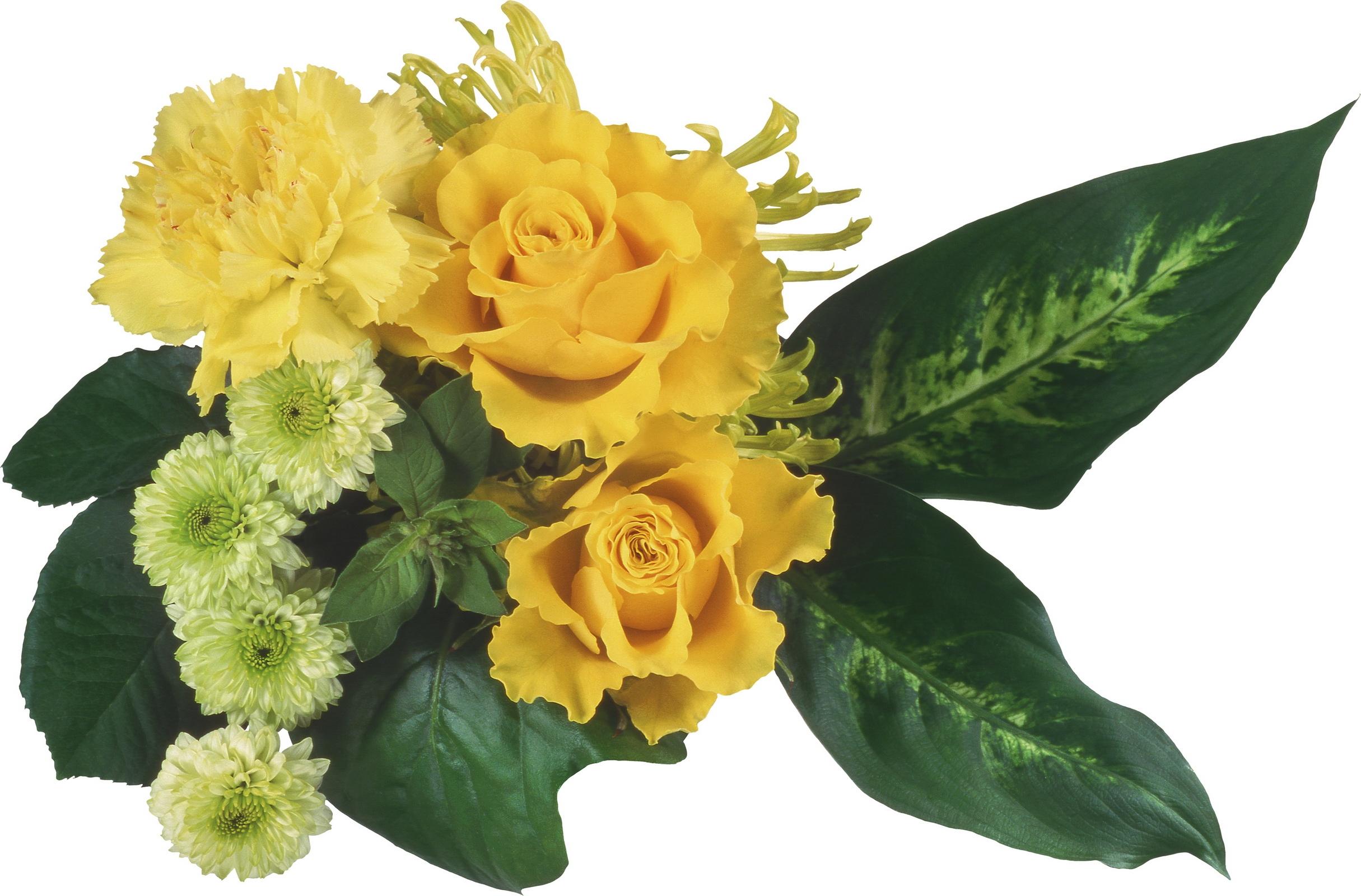 Fondos De Pantalla Hojas Amarillo Crisantemos Flor