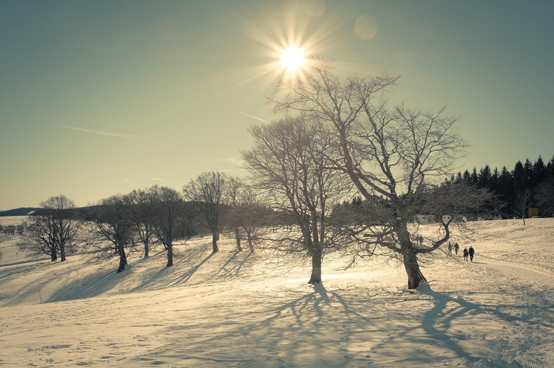 hintergrundbilder licht sonne schatten winter schnee baum silhouette schwarzer wald. Black Bedroom Furniture Sets. Home Design Ideas