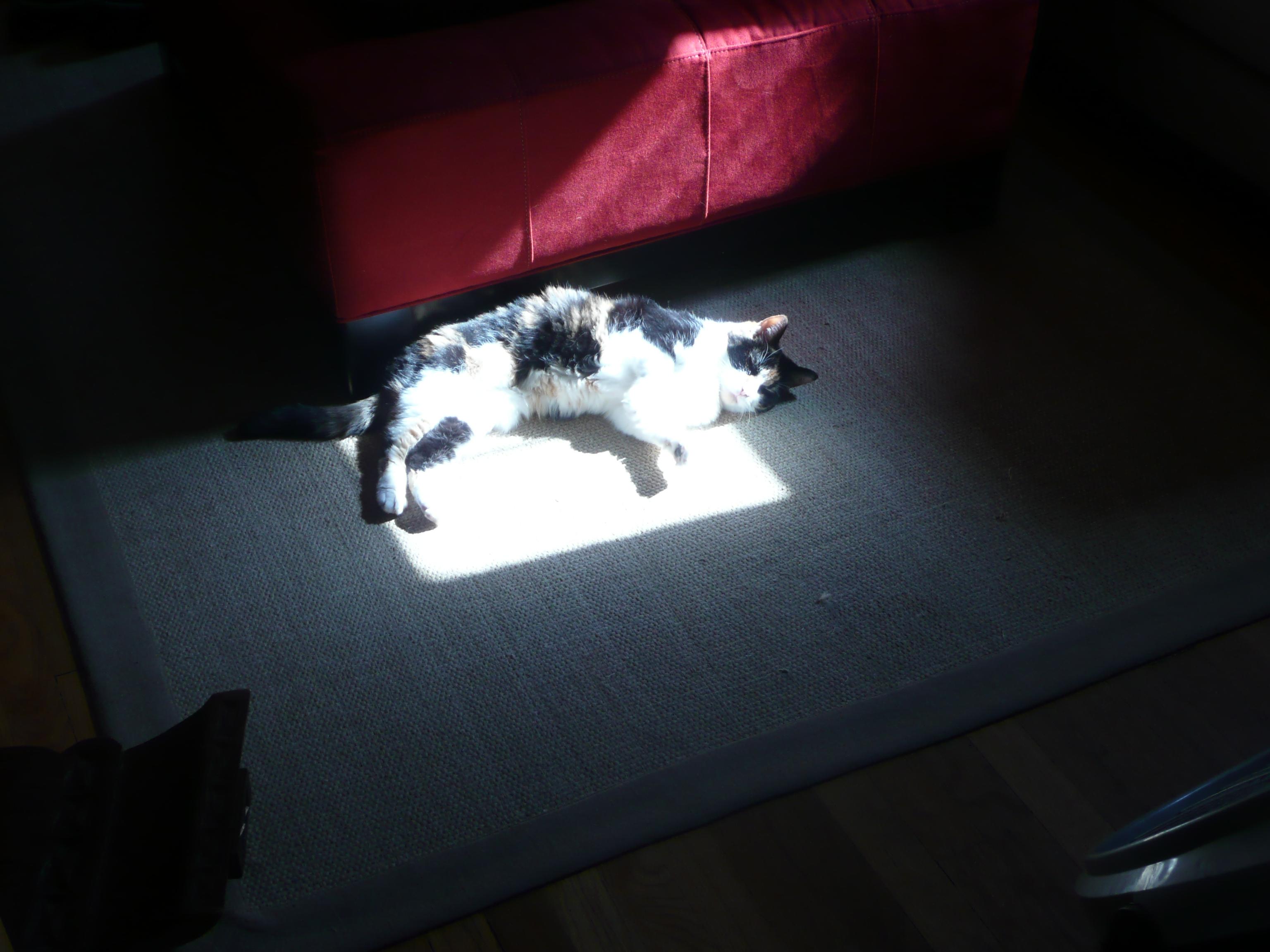 Light Pet Sun Luz Cat Hair Fur Carpet Furry Feline Chat Lumiere Gato Calico Rug Sunspot