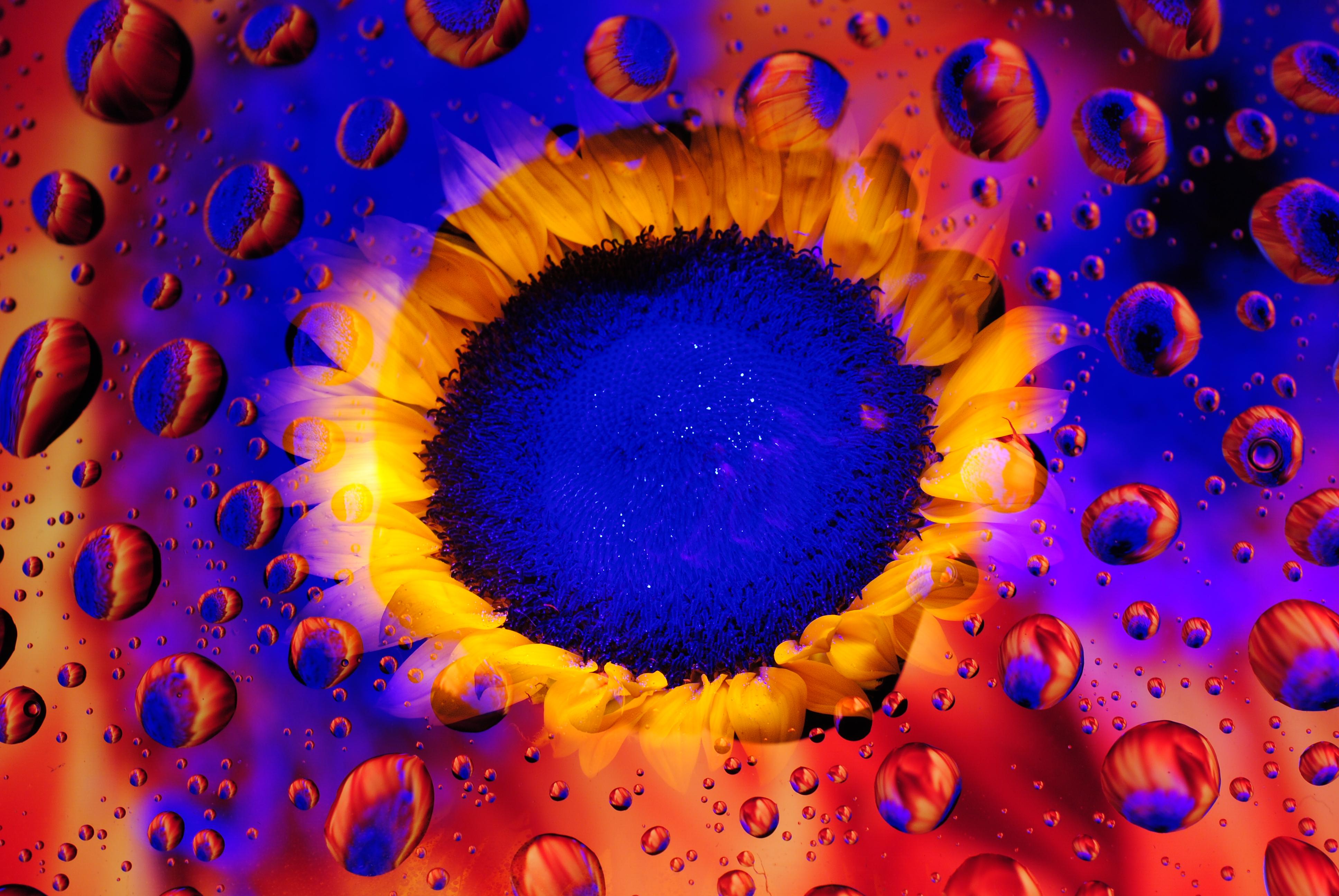 Masaüstü Hafif Boyama Papatyalar Ayçiçeği Psychedelic Su