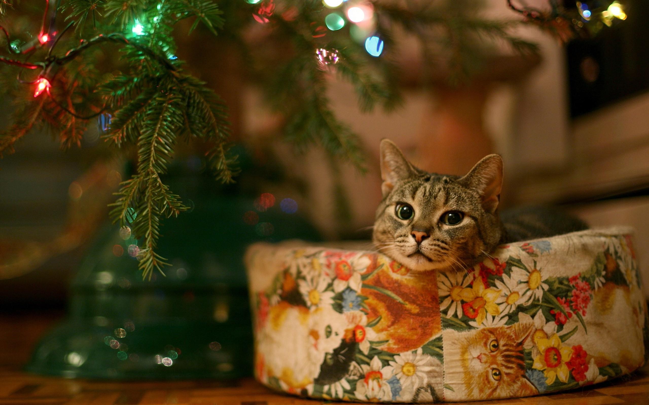 Wallpaper : lights, leaves, animals, branch, Christmas ...