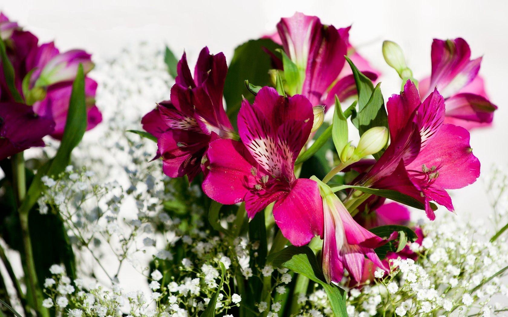 Фото красивые цветы гвоздики лилии тюльпаны