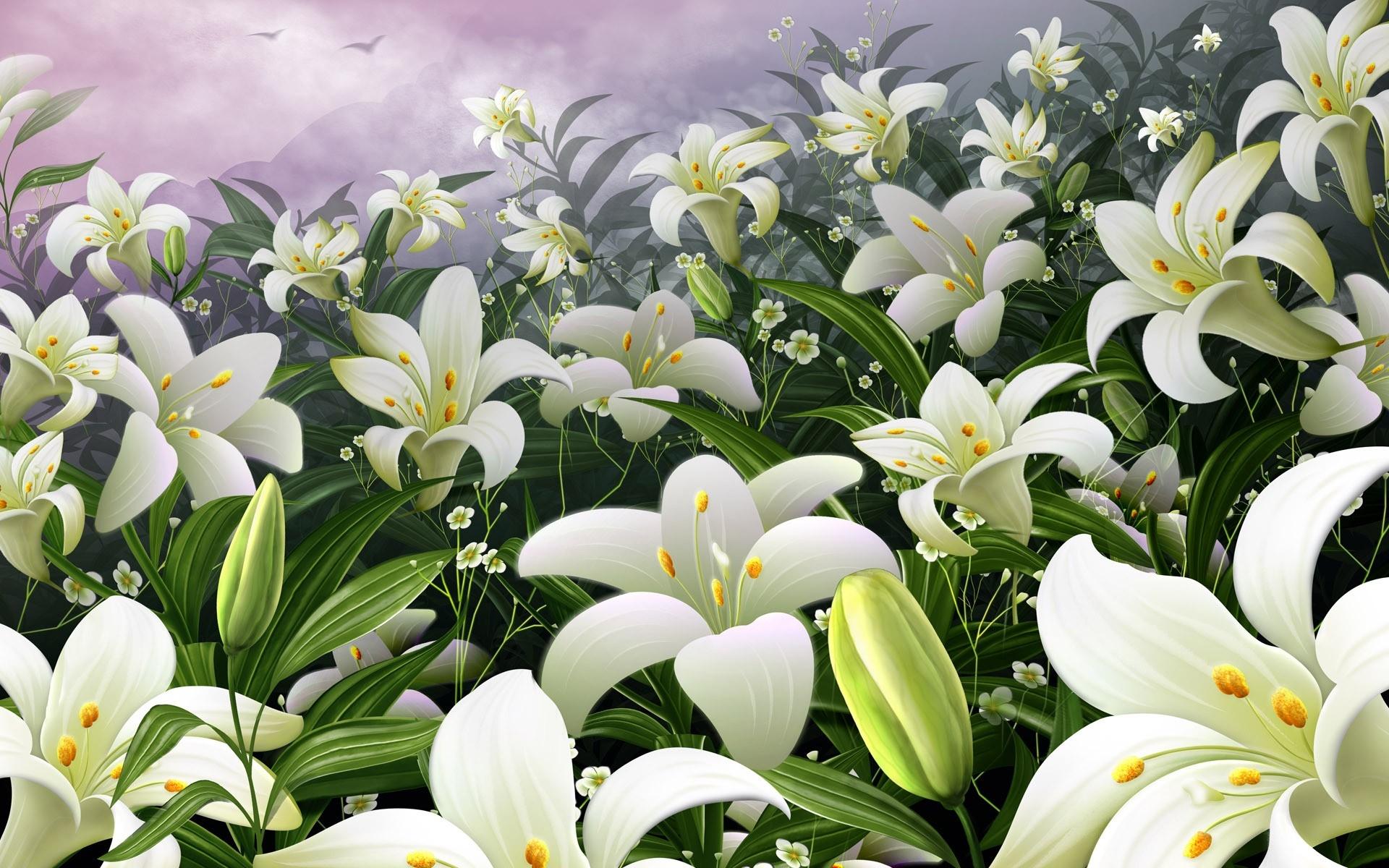 картинки ромашки с лилиями садовой