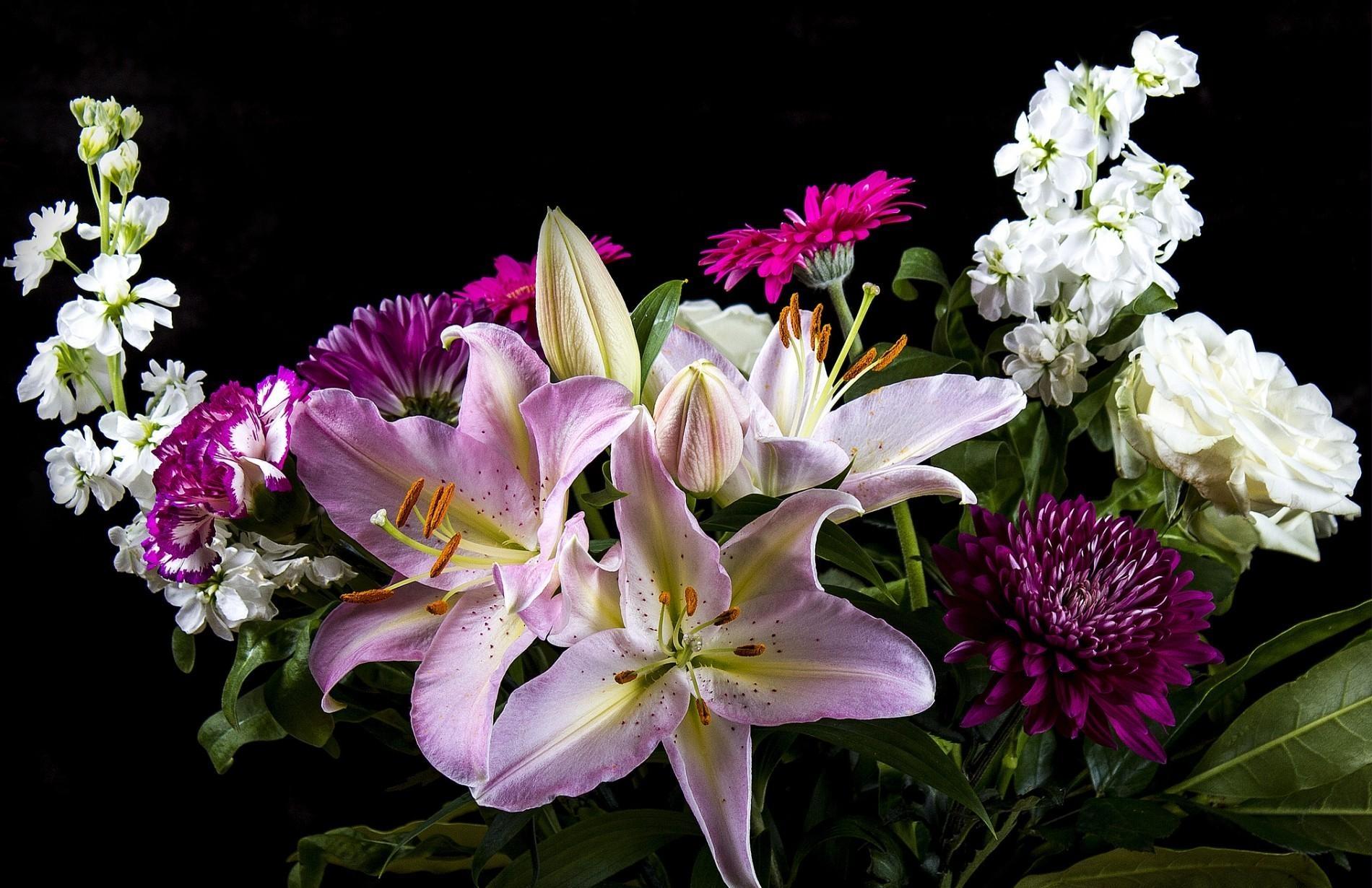 Картинки живые цветы лилиями