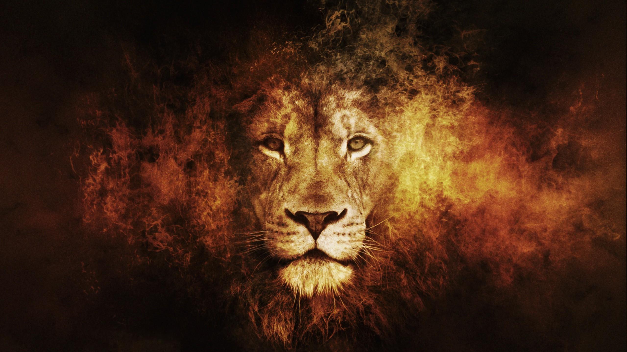 Fond Décran Lion Gros Chats Obscurité 2560x1440 Px