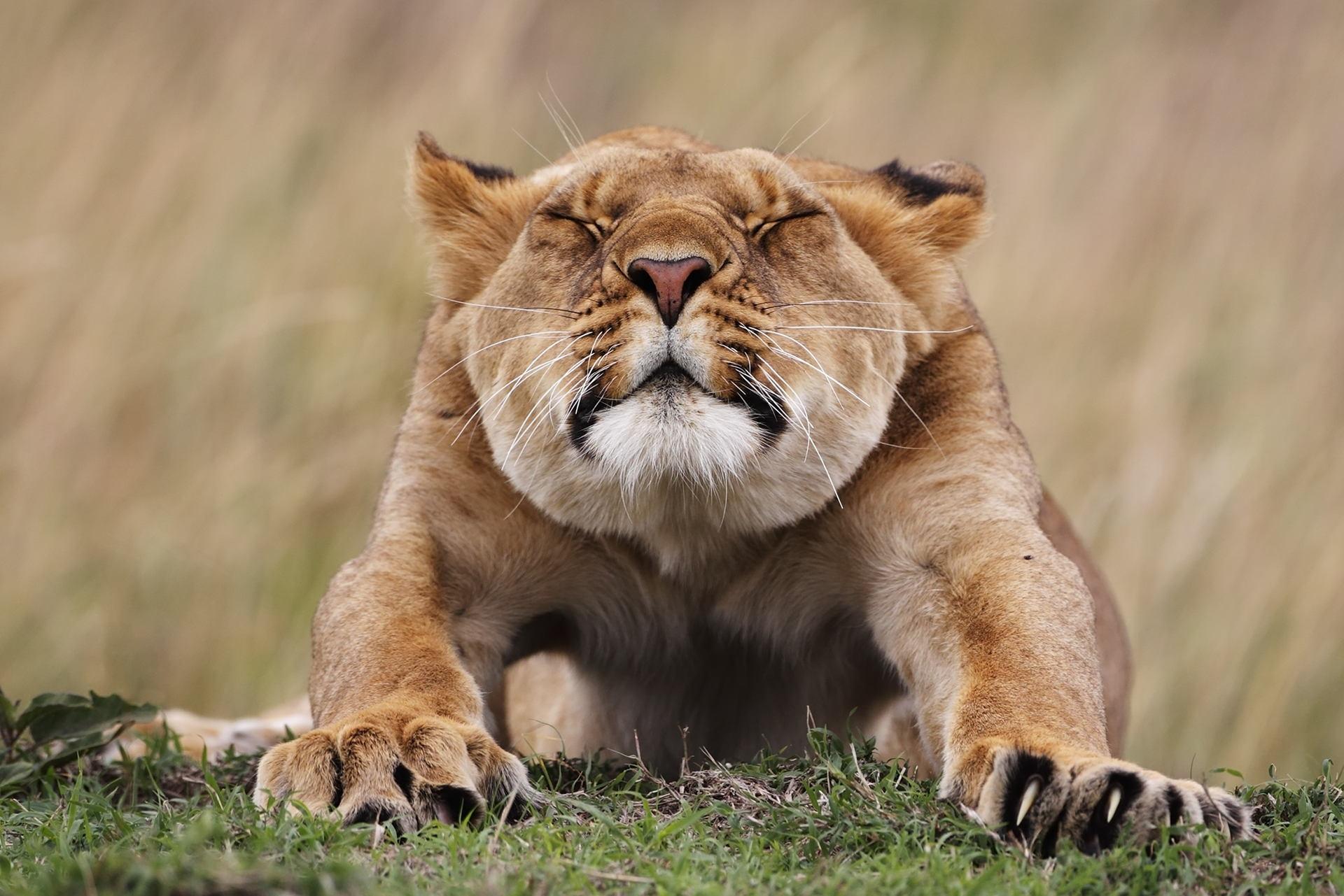 бельё львы доброе утро фото ранее располагался лишь
