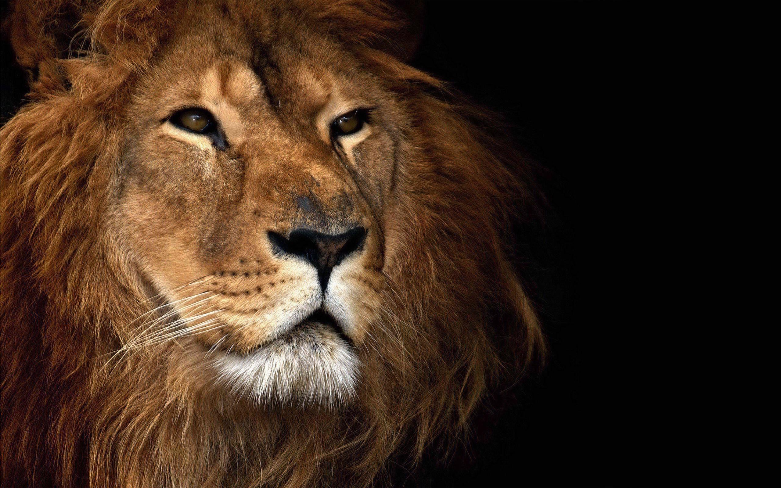 прелюбодеяние, там картинки для скачивания львы умеешь