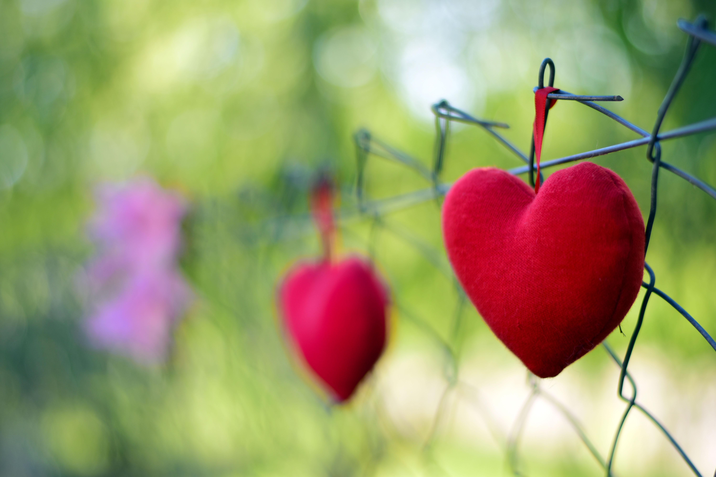 Wallpaper Love Heart Red Grass Branch Blossom Spring Leaf
