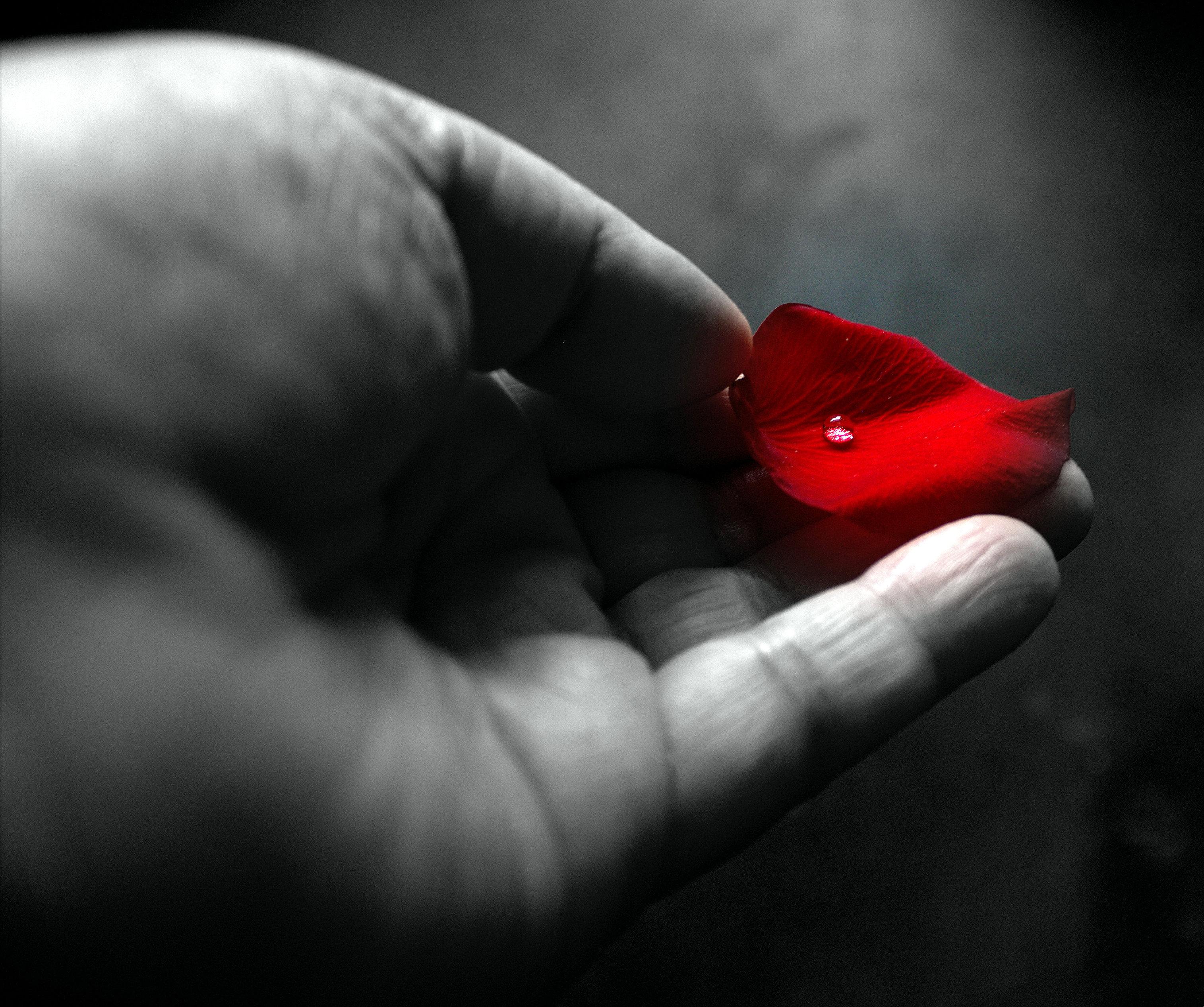 Fond D Ecran Amour Rouge Rose Rouge Fleur Main Clou Doigt