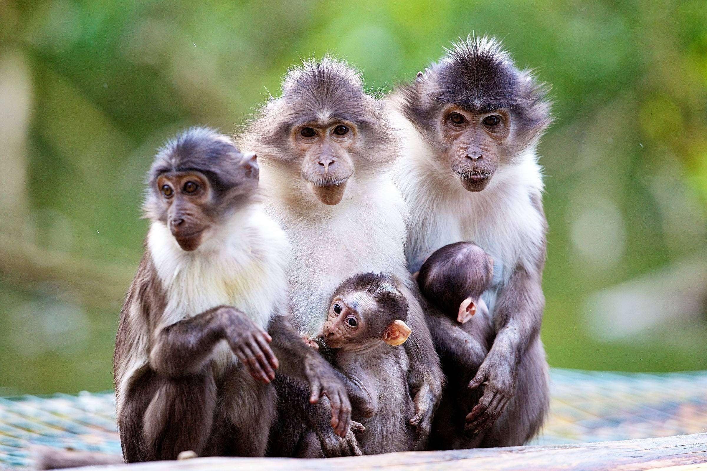Картинки с обезьянами