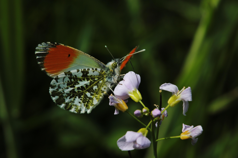 Taustakuvat makro hy nteinen kev t koi kukka for Koi papillon