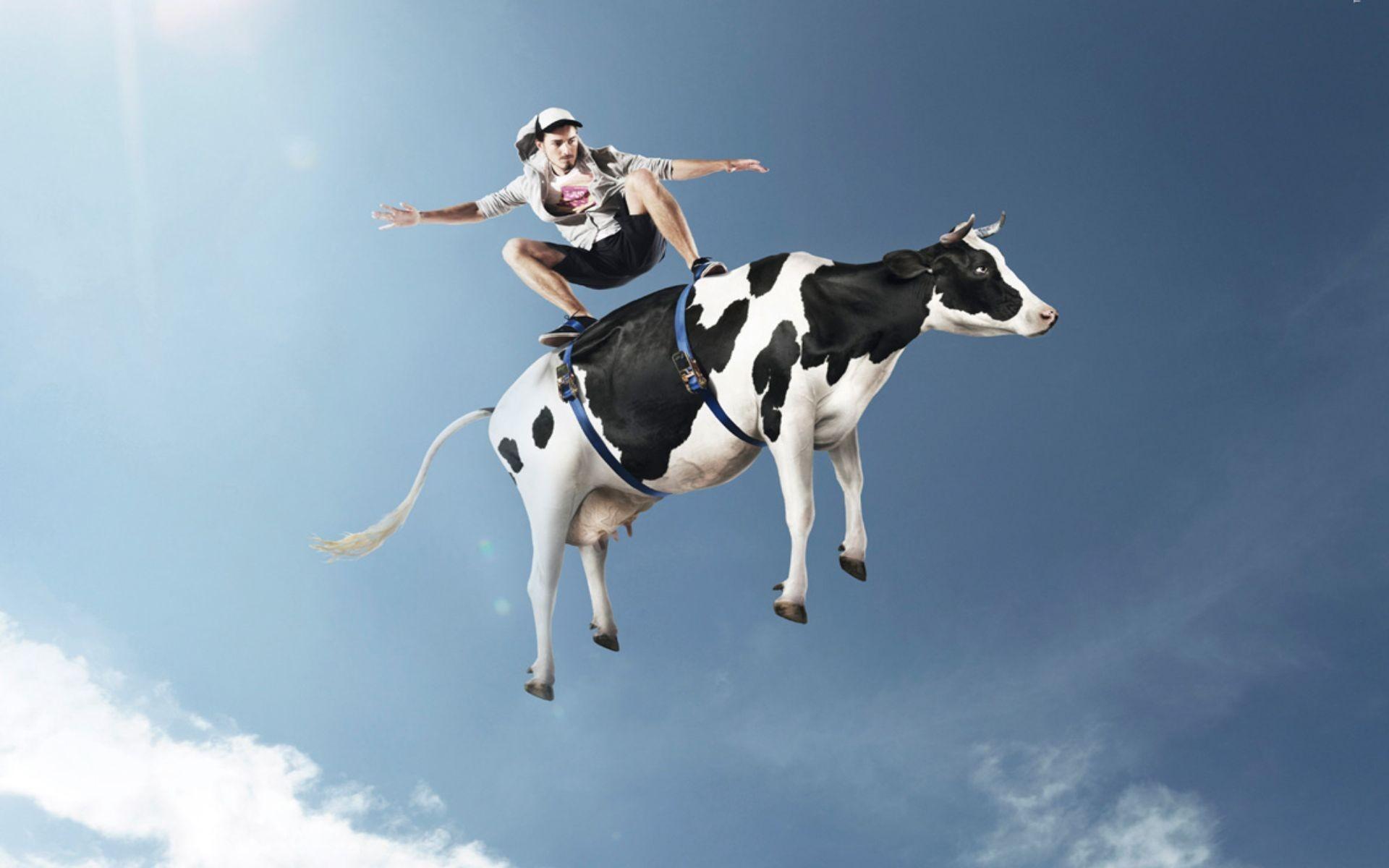 Wallpaper : men, humor, jumping, skateboard, cow ...