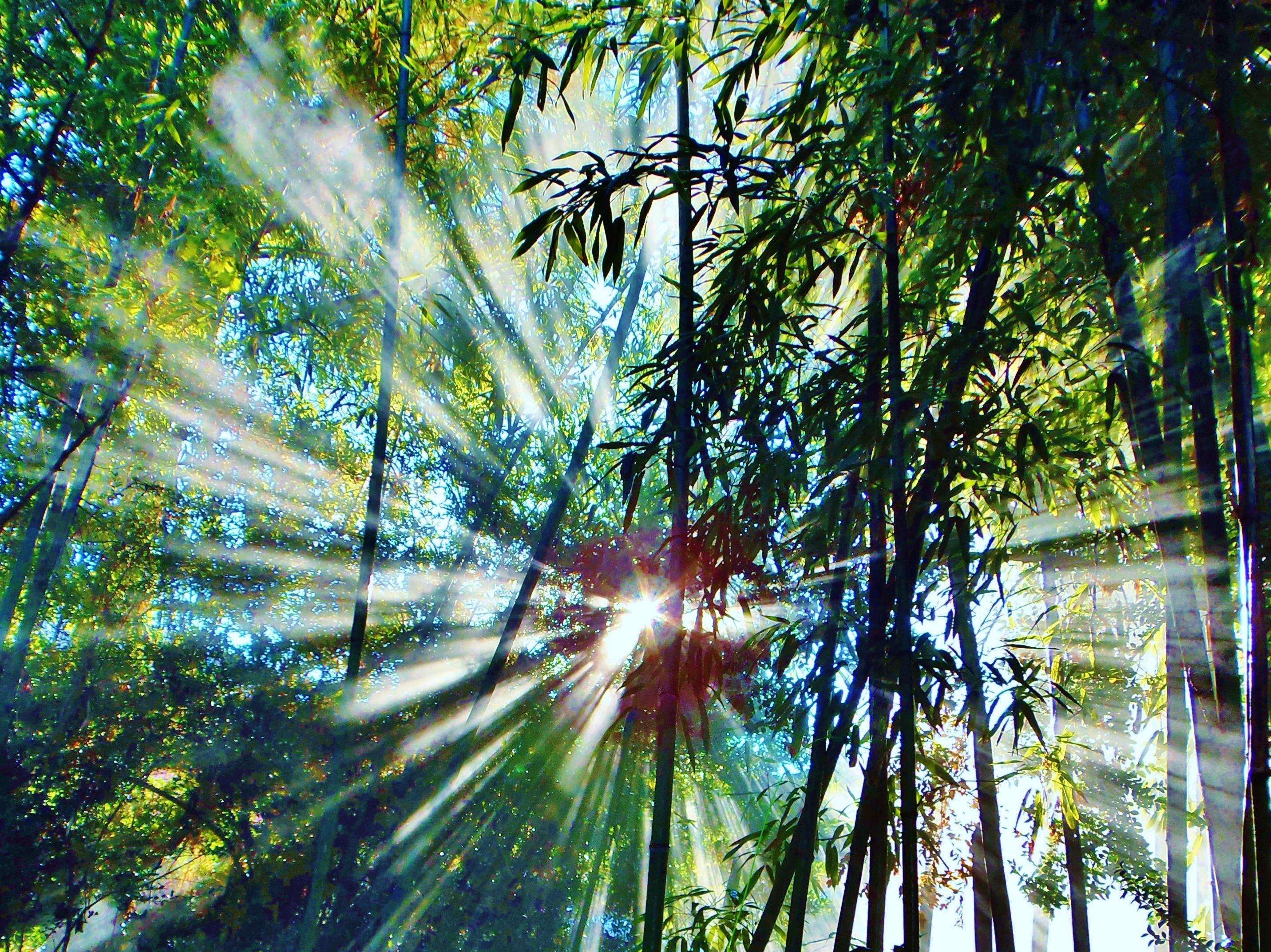 45 Koleksi Gambar Pemandangan Bambu HD