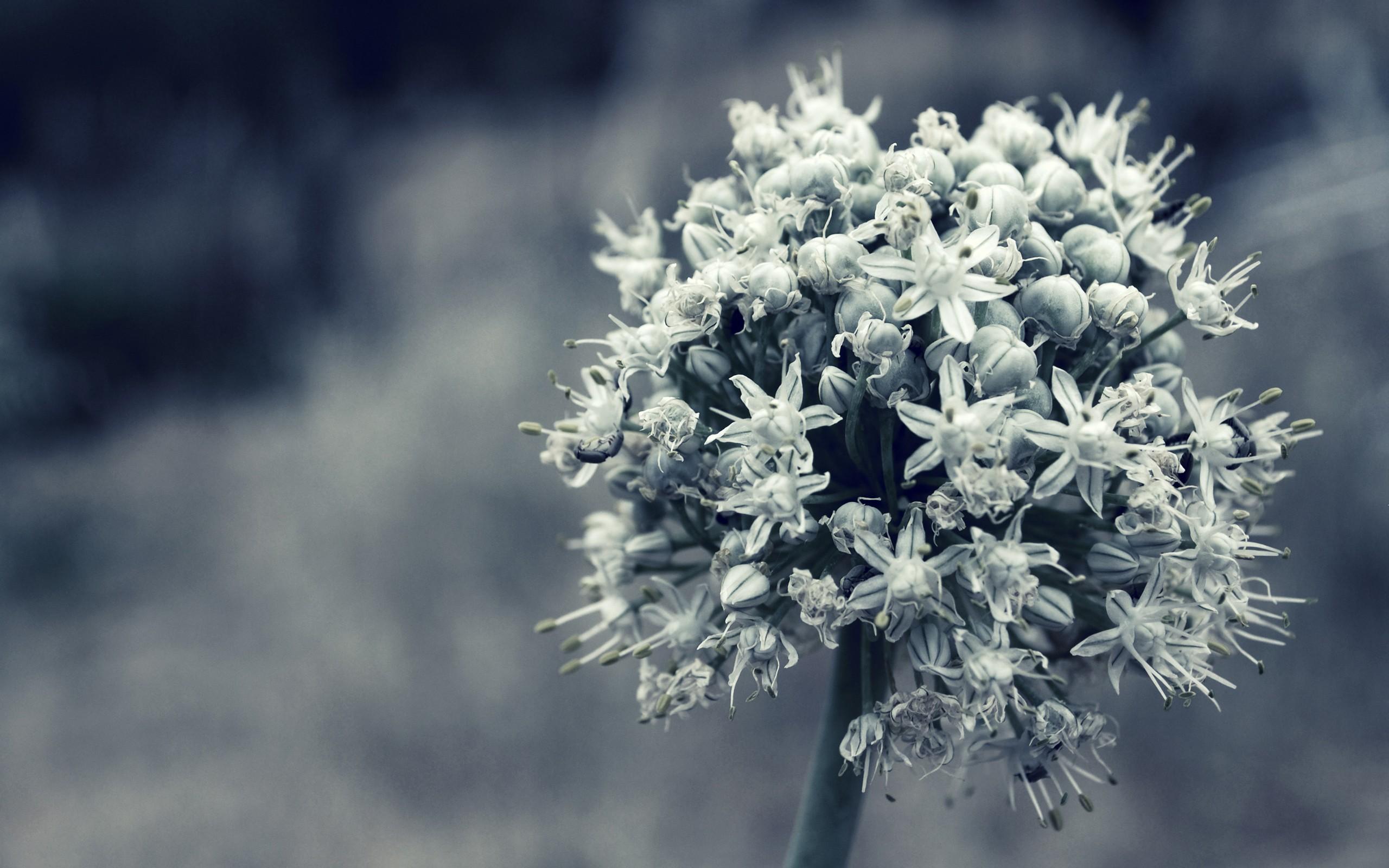 hintergrundbilder einfarbig blumen natur pflanzen schnee winter fotografie ast frost. Black Bedroom Furniture Sets. Home Design Ideas