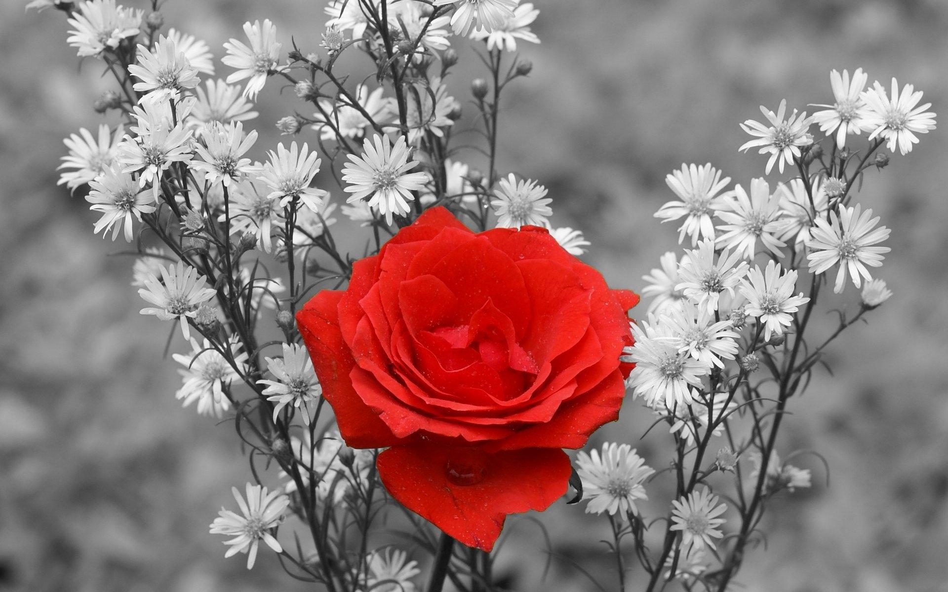 Все картинки цветов