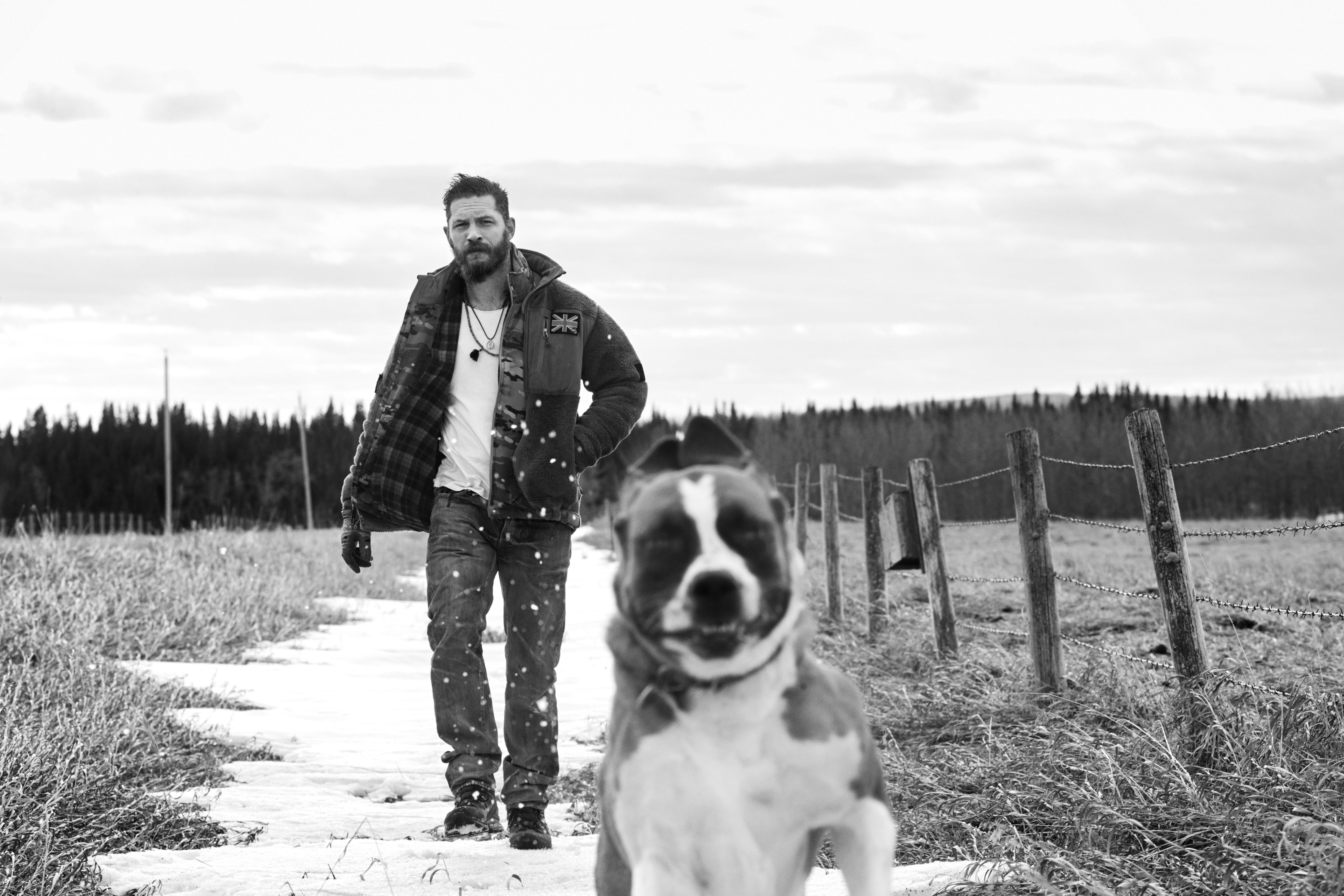 Monochrome Snow Winter Dog Tom Hardy Mammal Black And White Photography Like