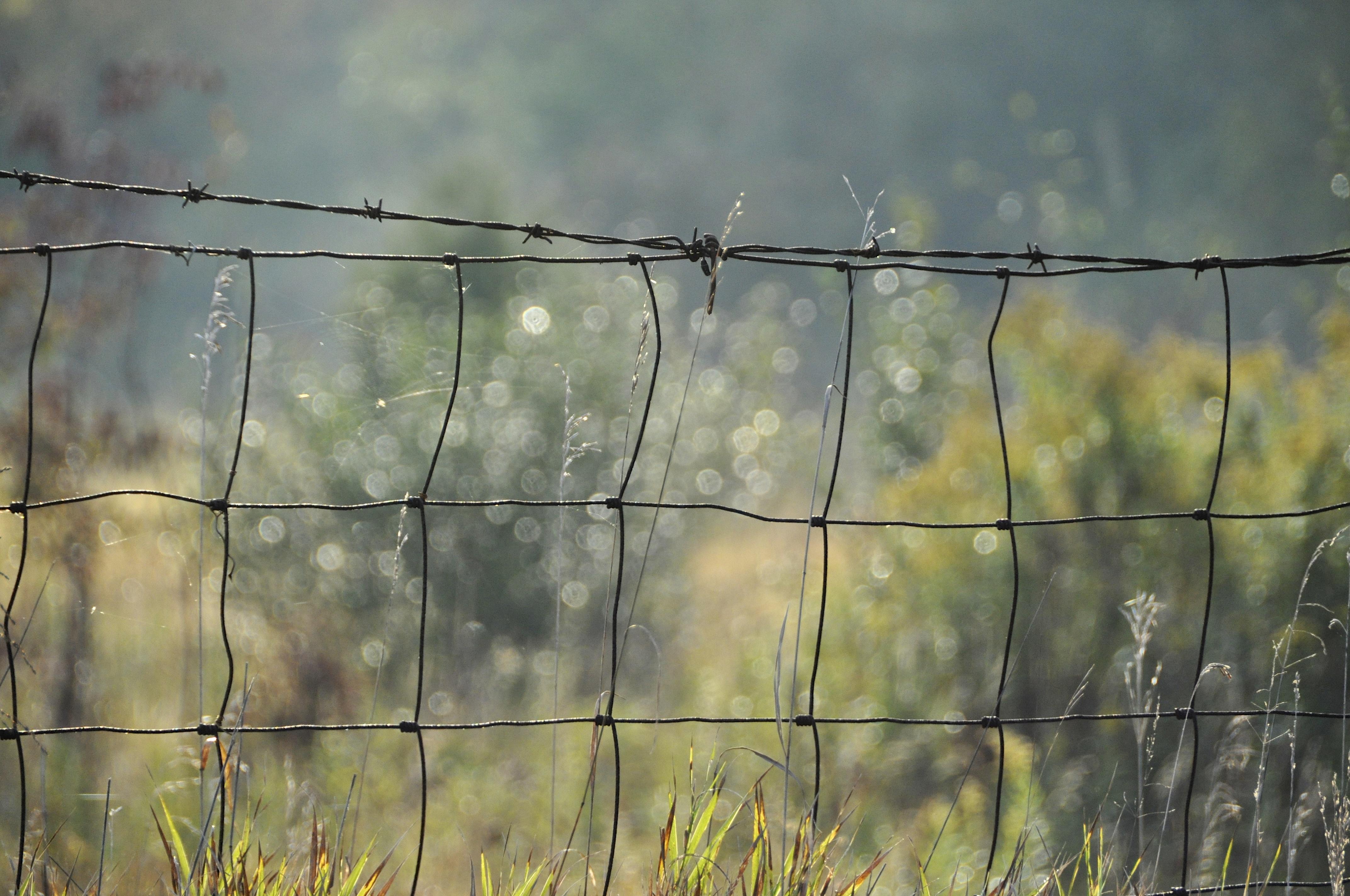 Hintergrundbilder Morgen Fallen Zaun Bokeh Tau Stacheldraht