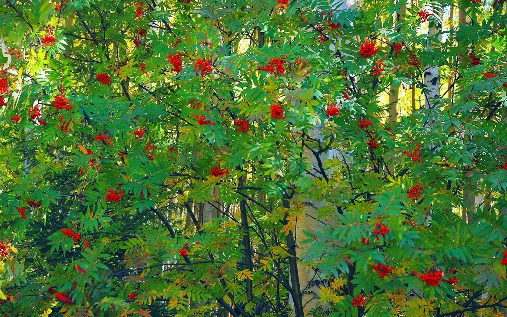 питания картинки фото деревья кустарники такой зубик