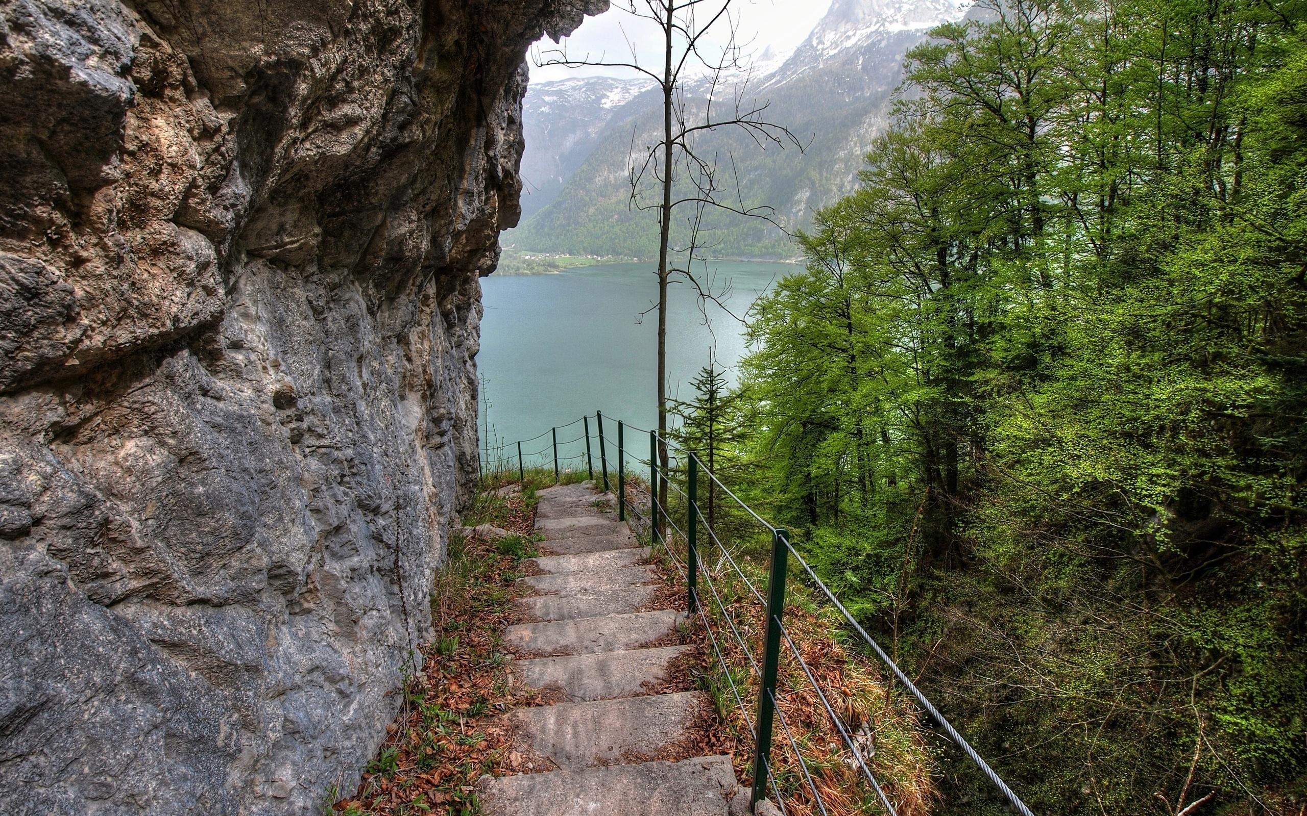 этого картинки лестницы в гору подсолнух неприхотлив, потребует