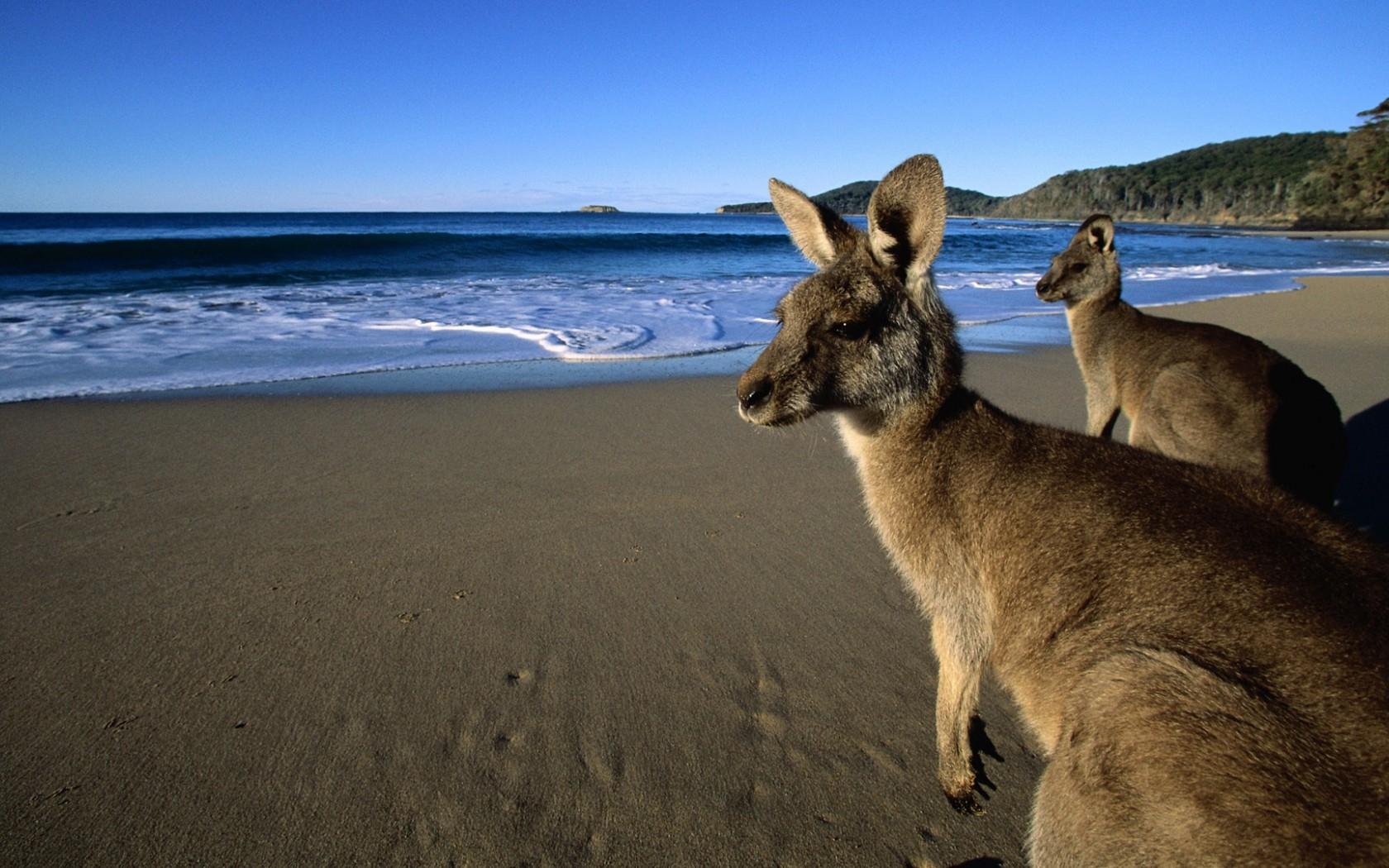 Fondos De Pantalla Montañas Mar Agua Arena Playa Fauna