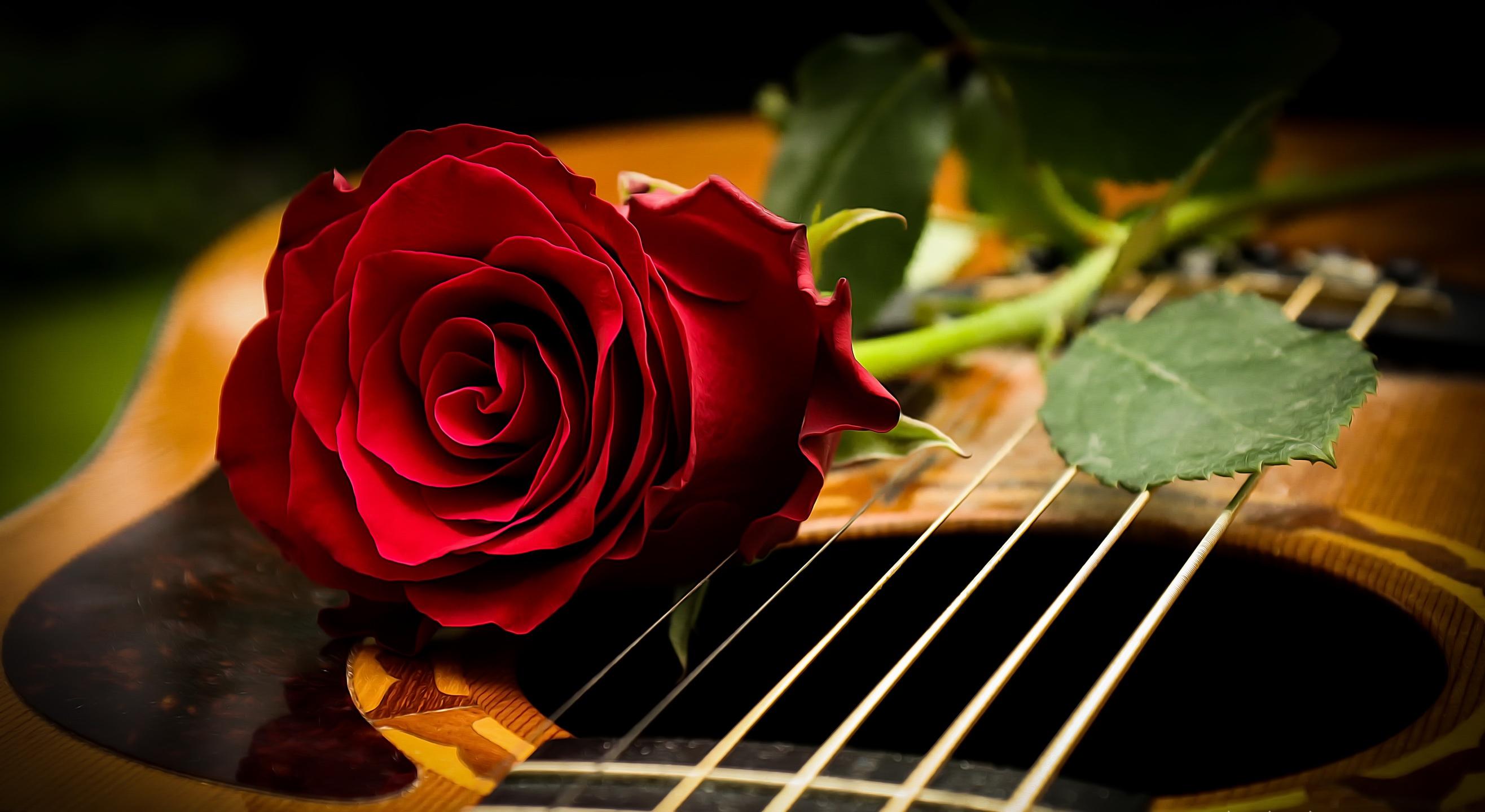 Beautiful Wallpaper Music Rose - musical-instrument-rose-flowers-guitar-red-flowers-1168893  Trends_46342.jpg