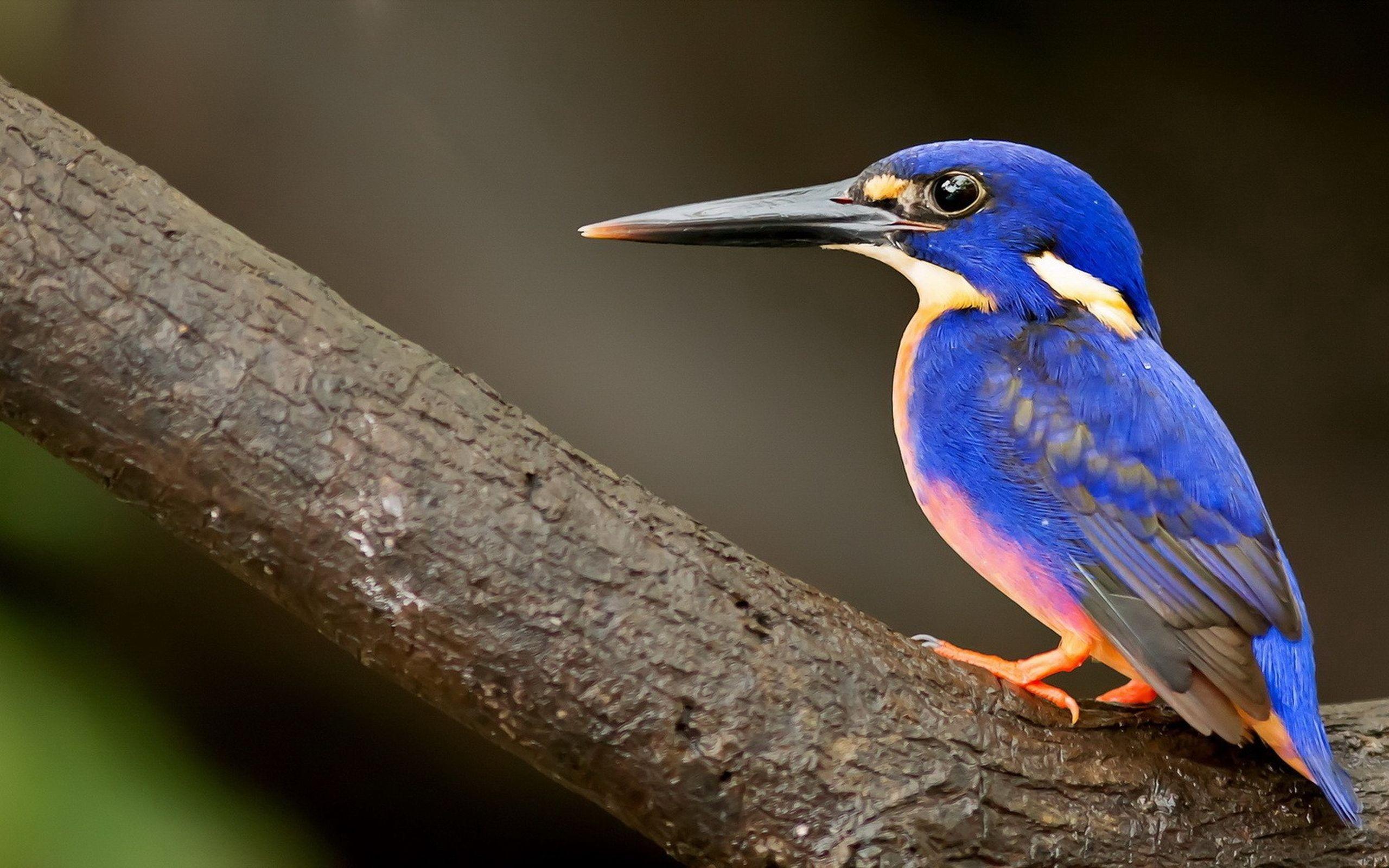 находятся смотреть картинки птиц милыми зверушками праздникам