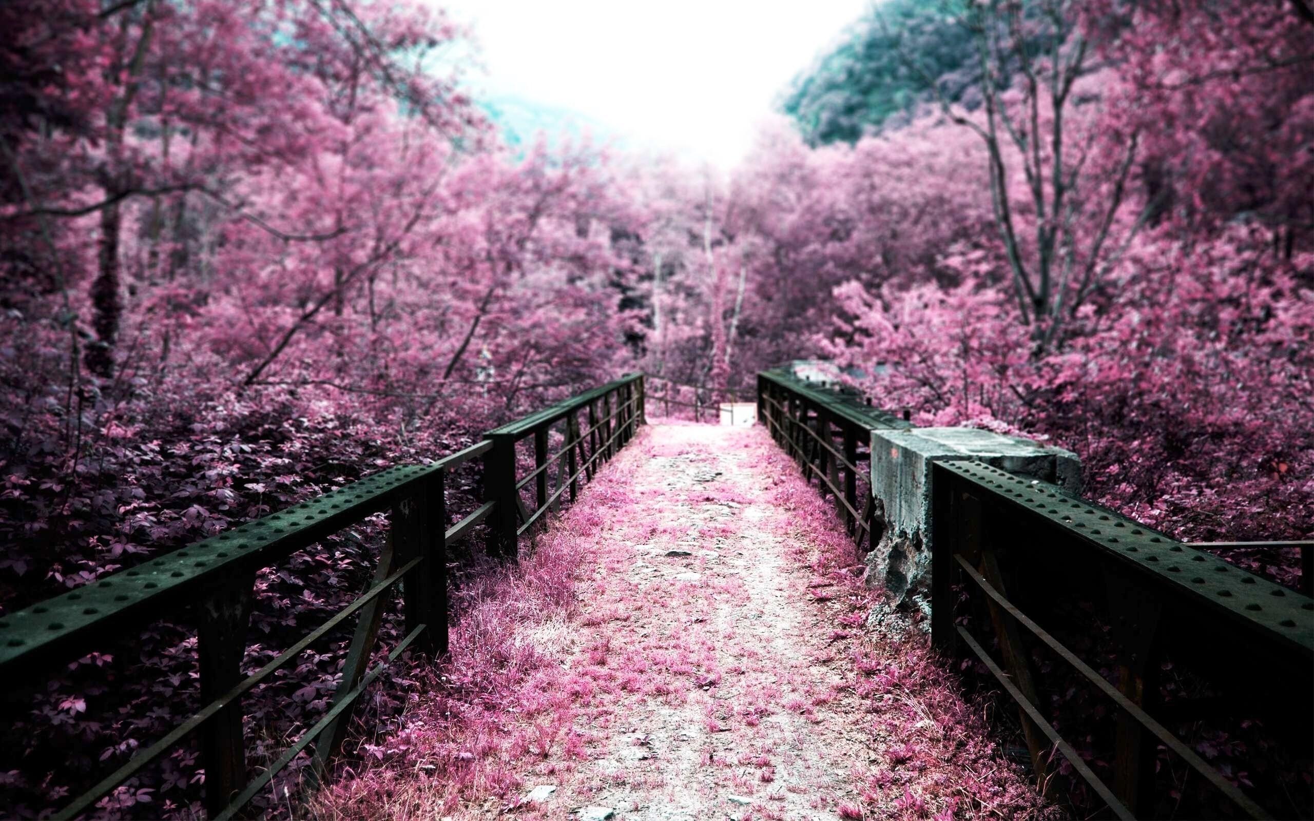 Nature Branch Cherry Blossom Spring Autumn Flower Plant Season 2560x1600 Px