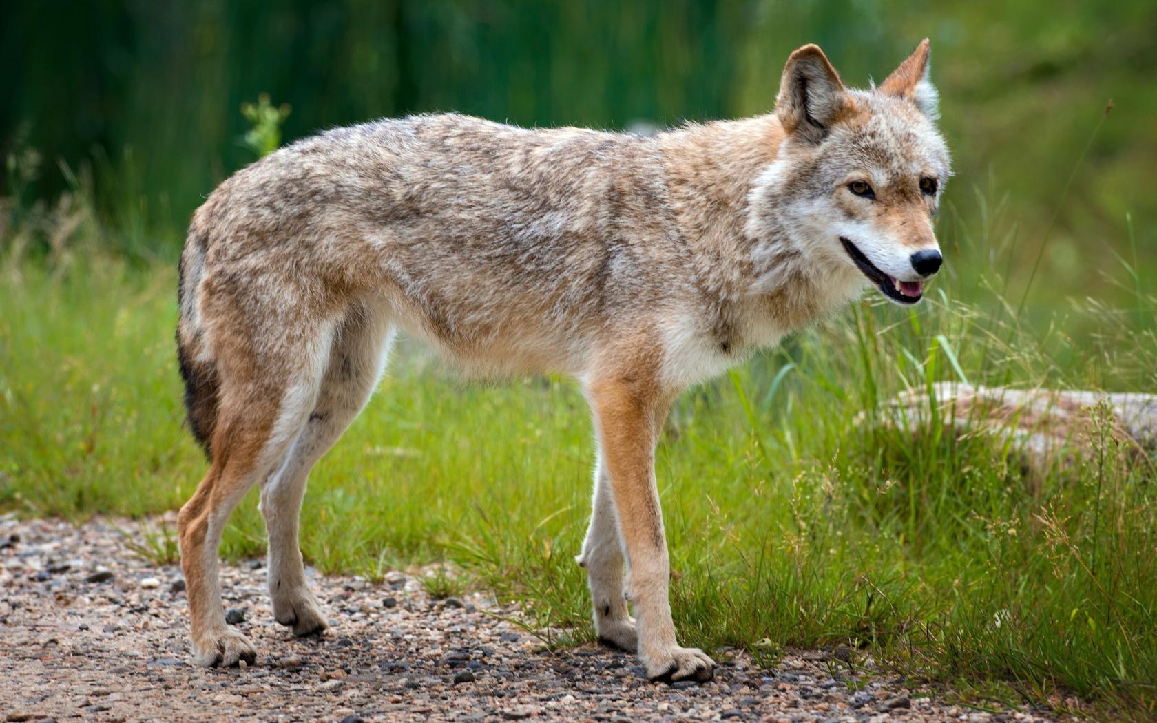 Fondos De Pantalla Naturaleza Fauna Silvestre Verano Pelaje
