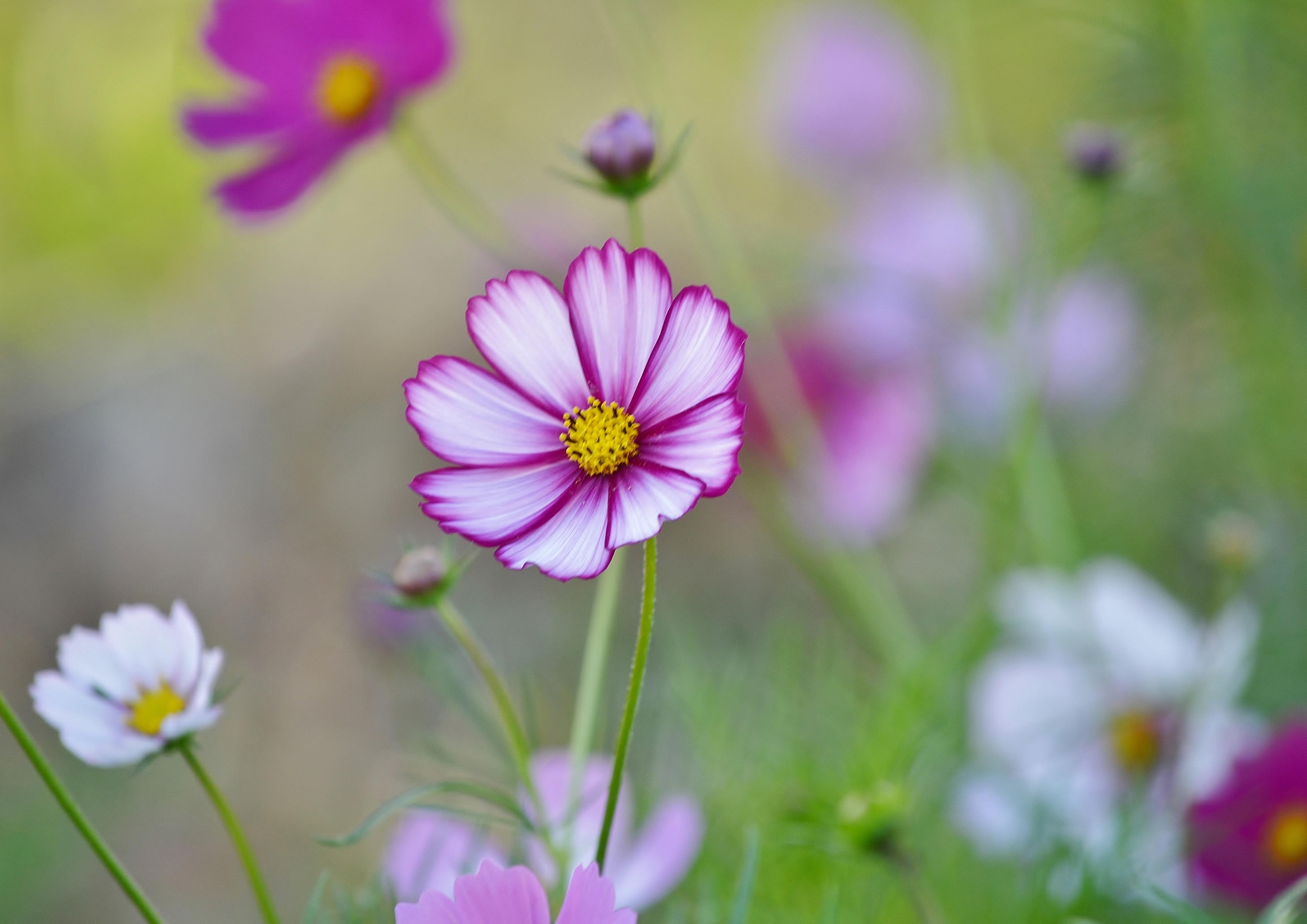 fond d 39 cran la nature champ fleur marguerite l 39 automne flore p tale prairie fleur. Black Bedroom Furniture Sets. Home Design Ideas
