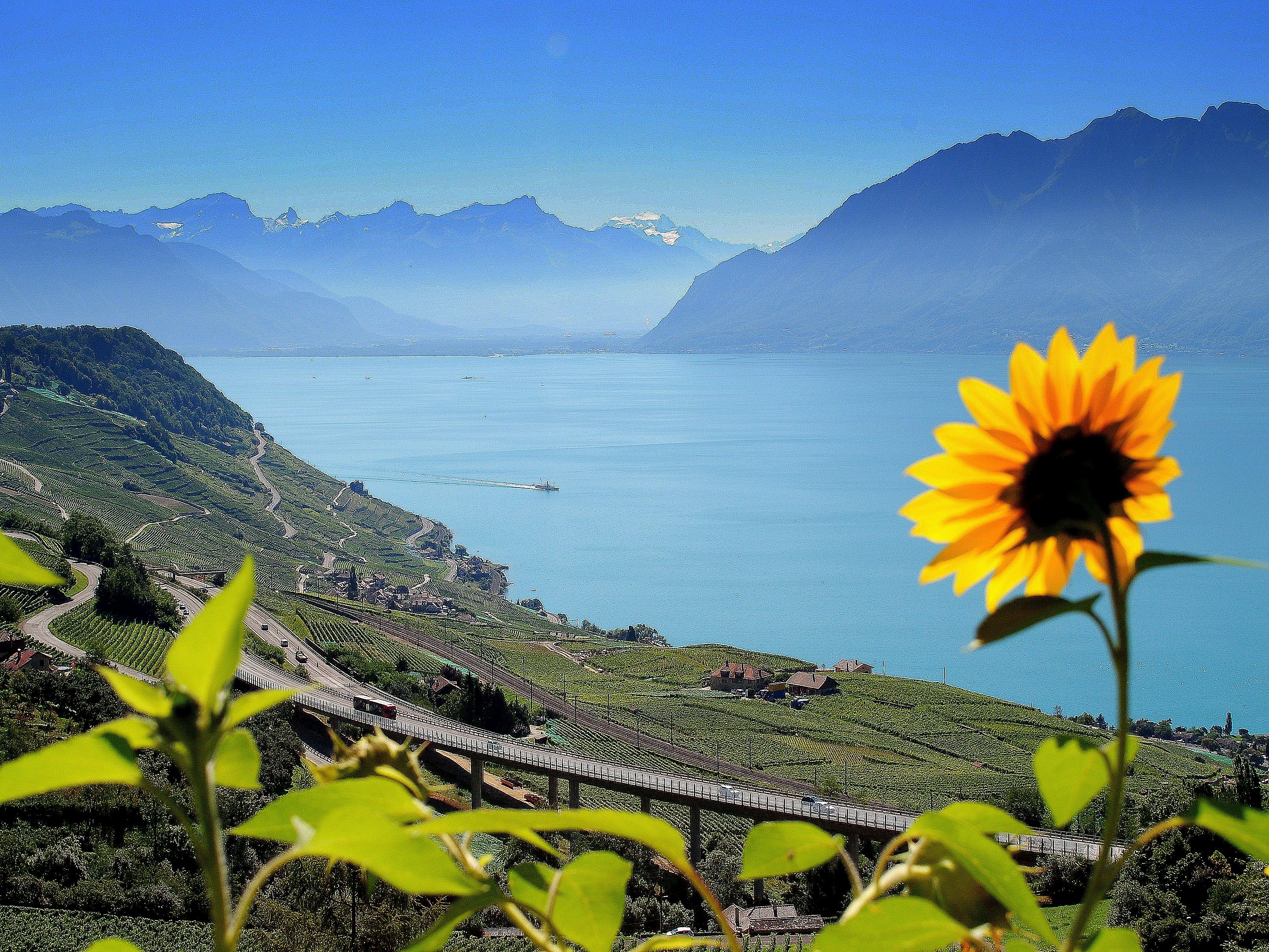 Unduh 6000+ Wallpaper Bunga Dan Pemandangan  Gratis