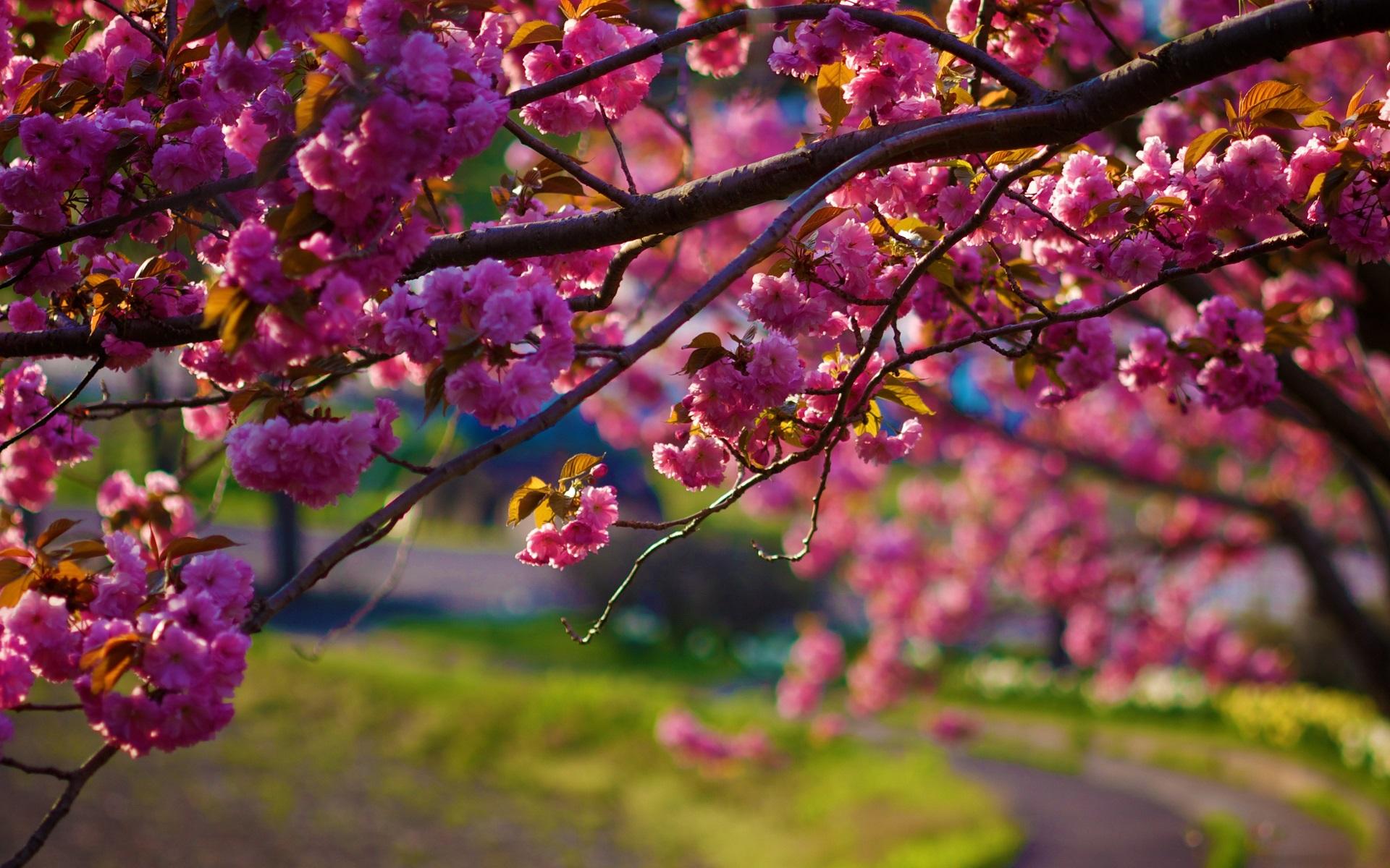 обещает фото весна природа хорошего качества знаете что девочка