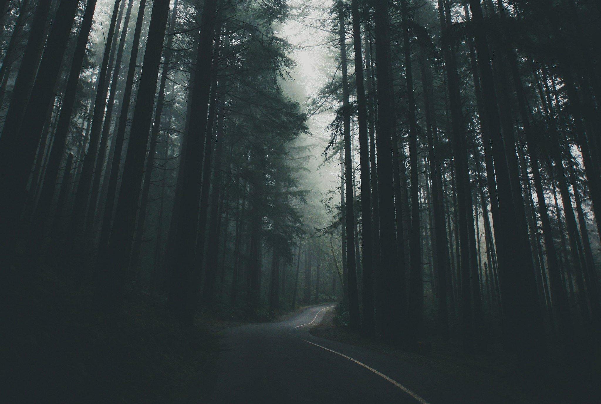 Обои на пк темный лес